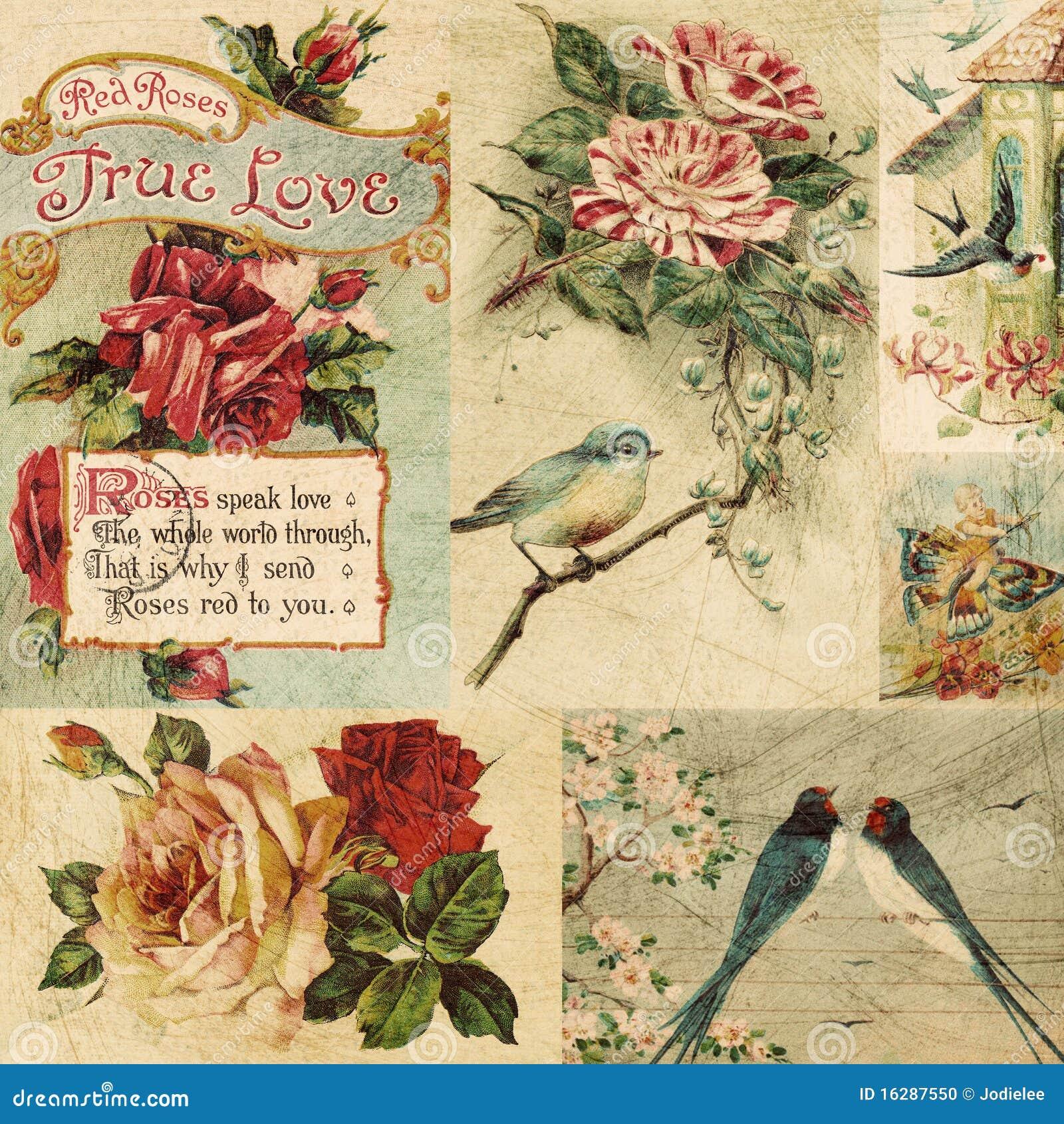 Fondo del pájaro de la vendimia y del collage de las flores