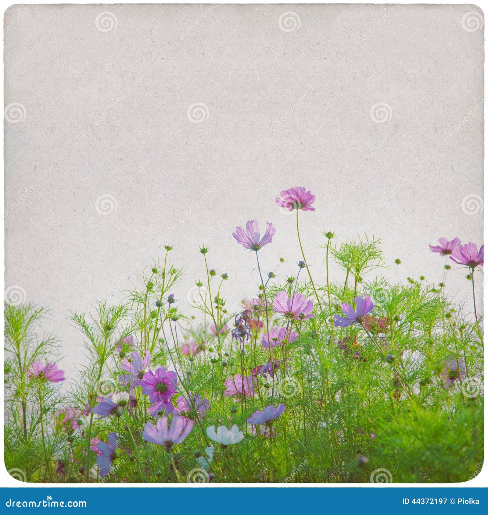 Fondo del prato del Wildflower