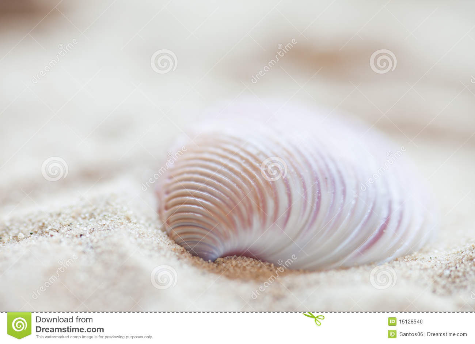 Fondo del Seashell