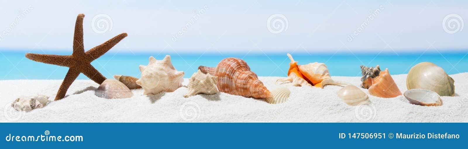 Fondo del verano de la bandera con la arena blanca Concha marina y estrellas de mar en la playa