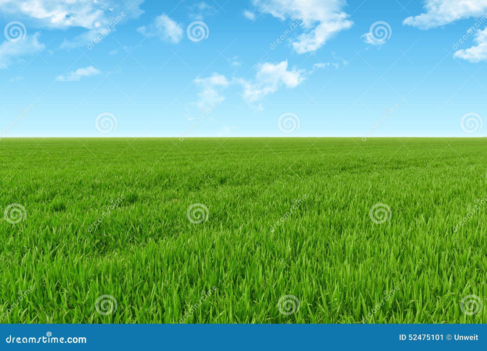 Fondo dell erba e del cielo