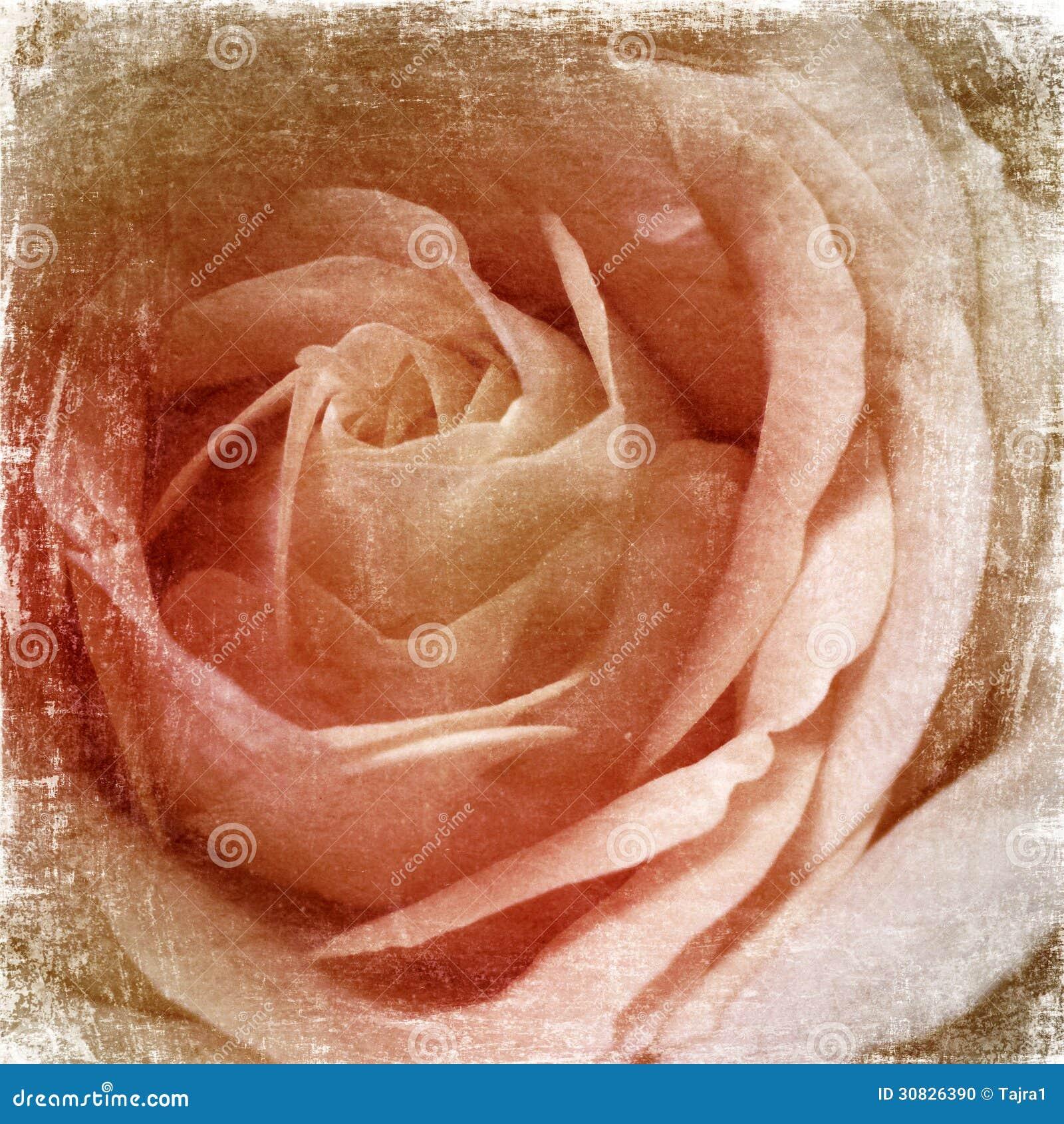 Fondo delle rose di lerciume