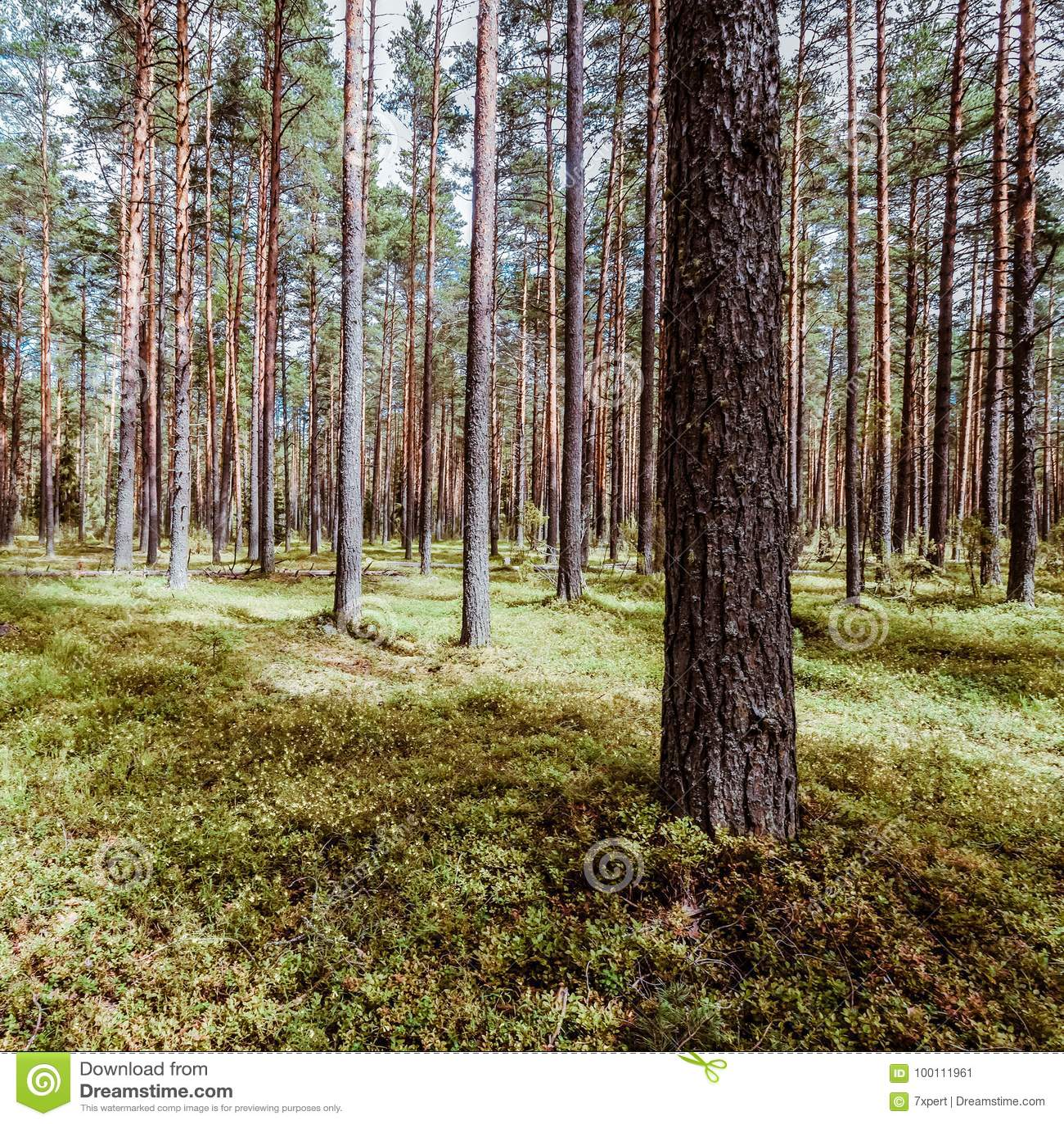 Fondo di estate di ecologia bello
