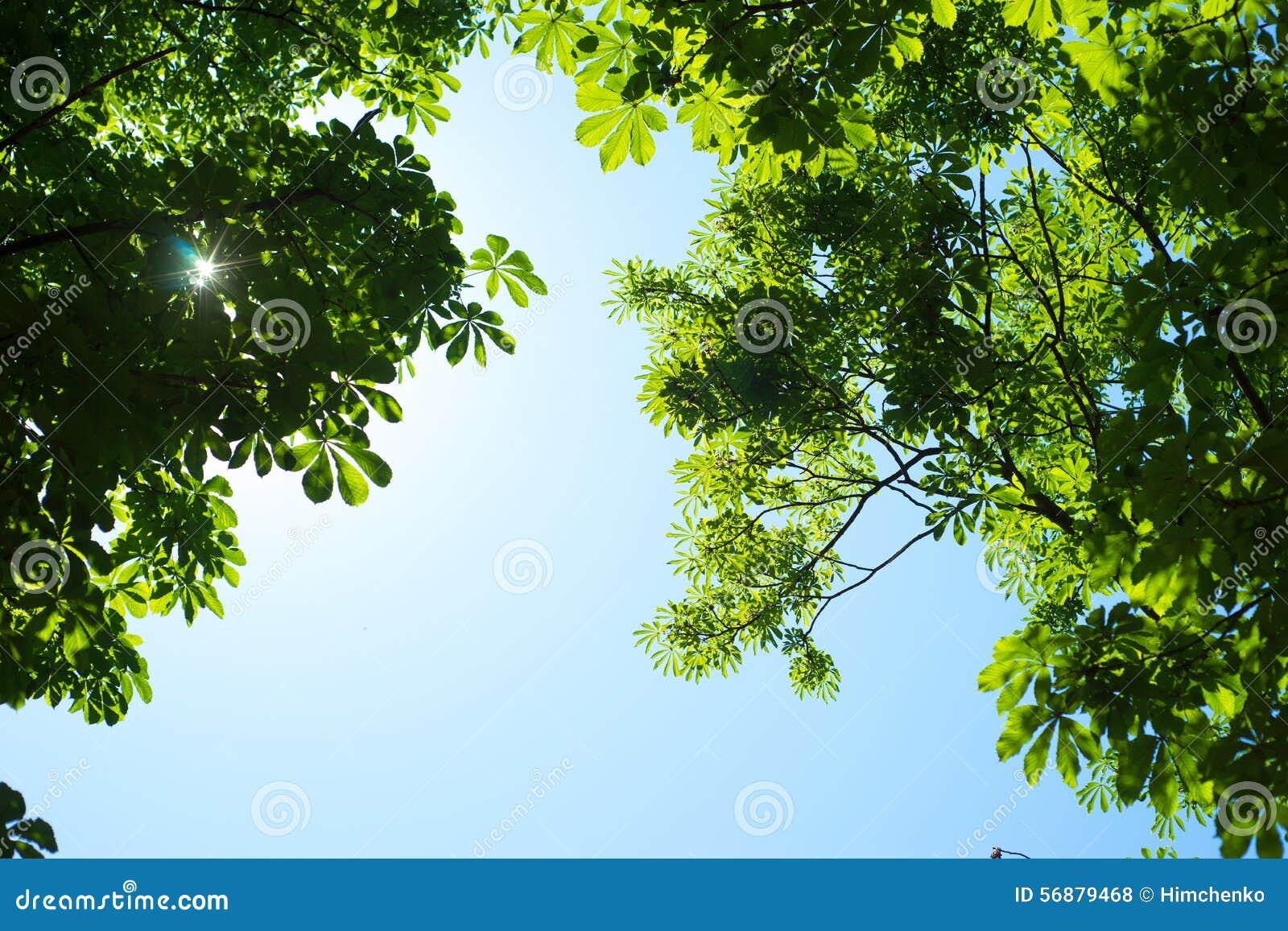 Fondo di fogliame e di cielo blu verdi