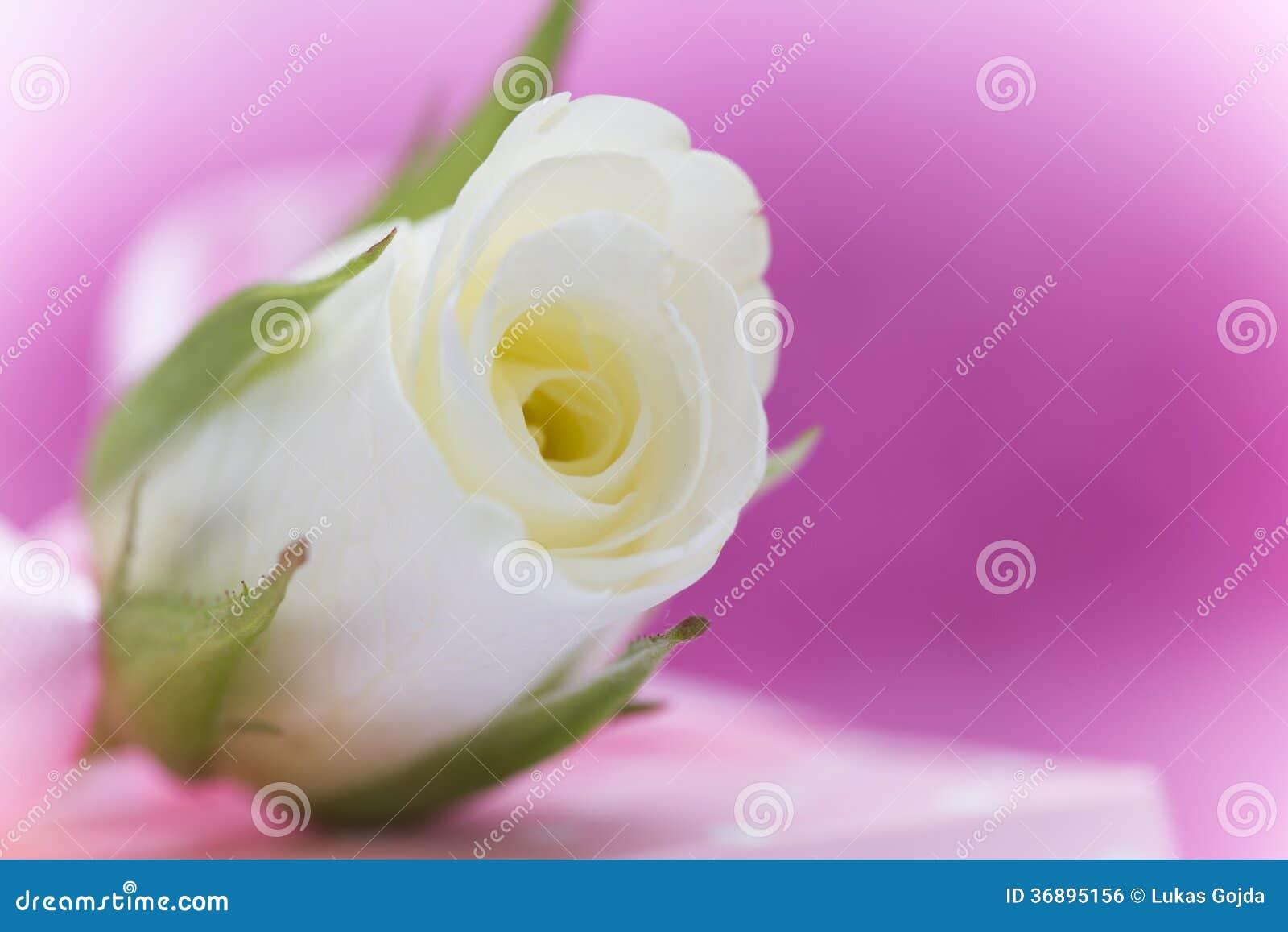 Download Fondo Di Giorno Di Valentin Fotografia Stock - Immagine di saluto, bandiera: 36895156