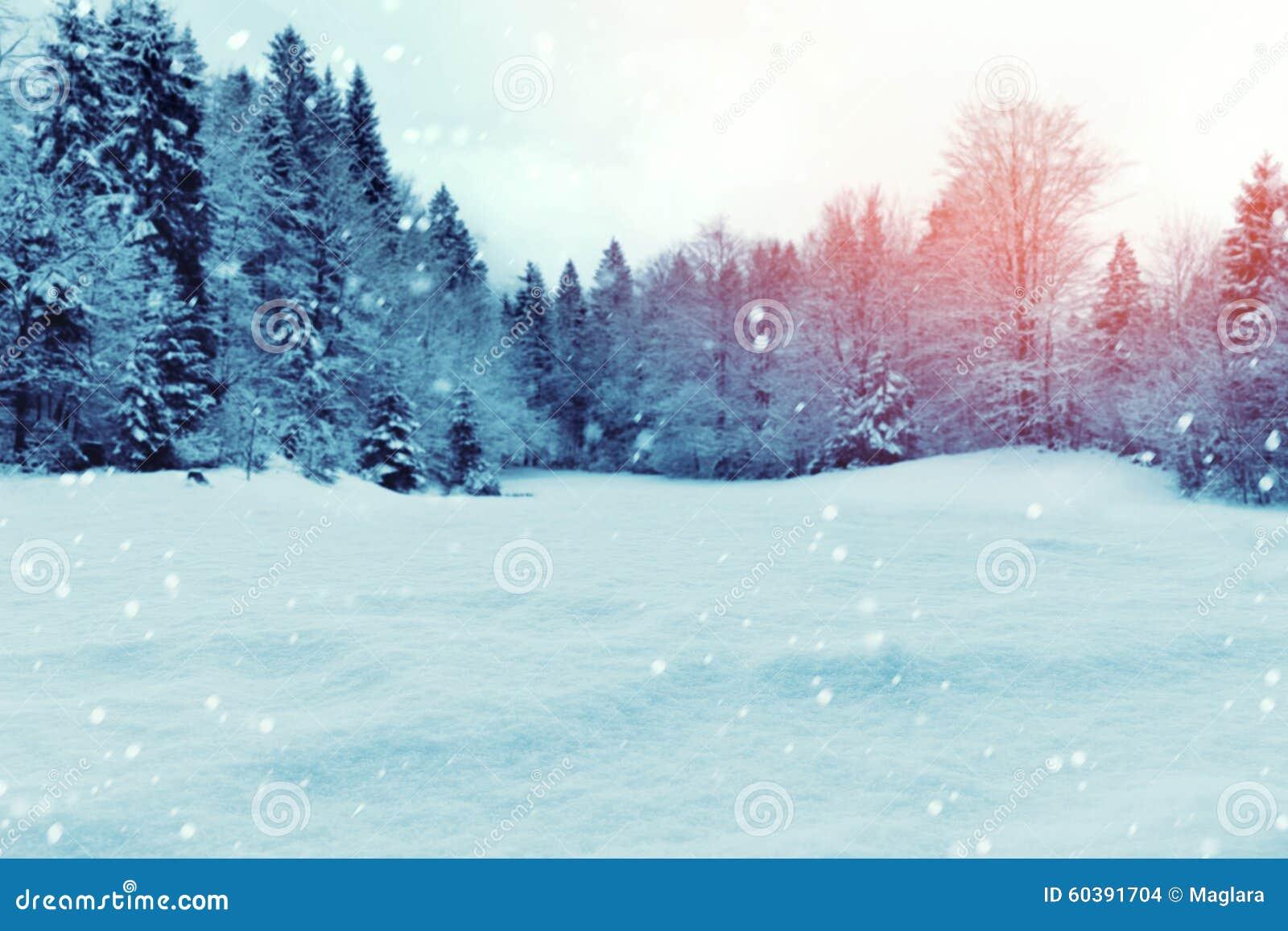 Fondo di inverno di Natale con neve e gli alberi