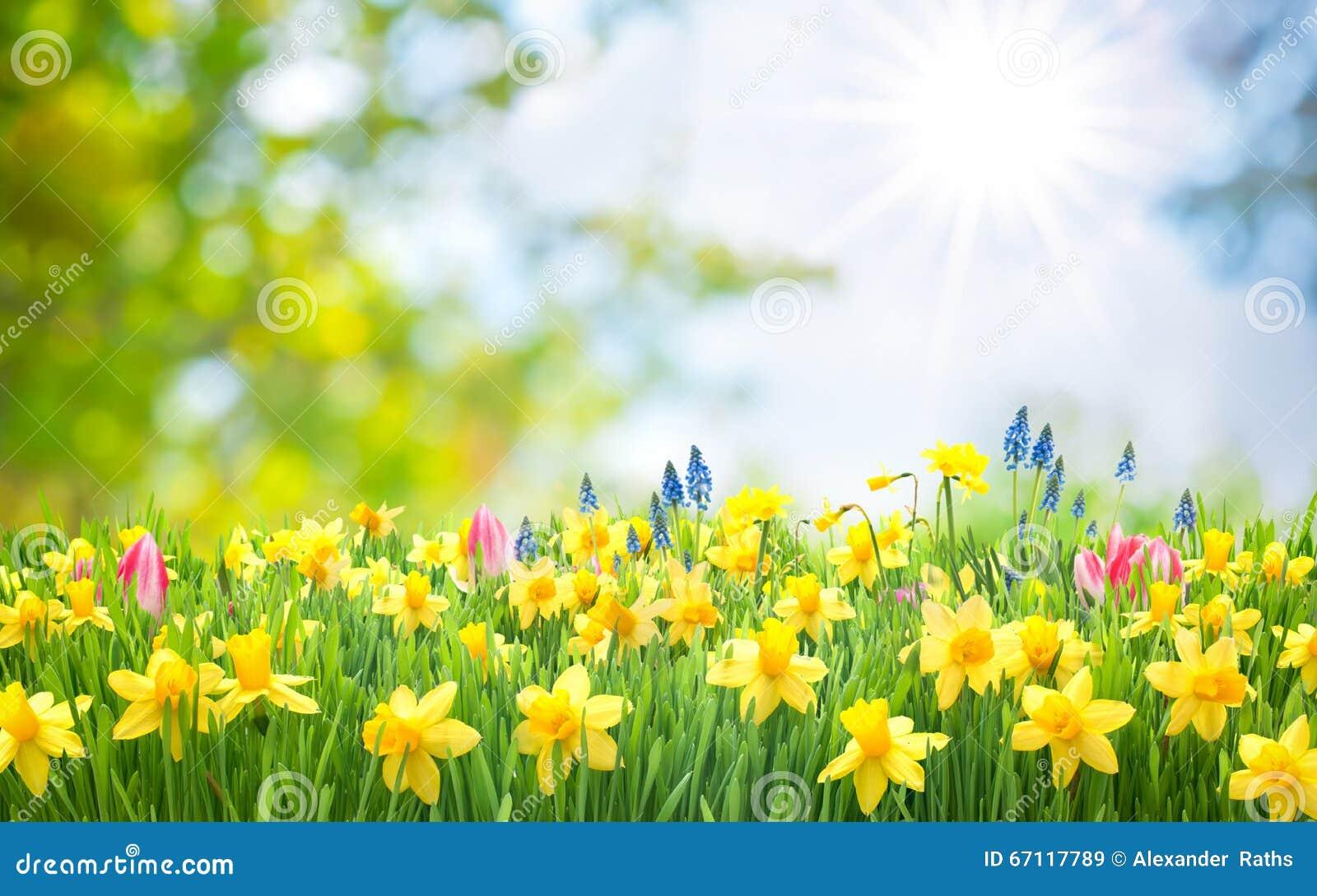 Fondo di Pasqua della primavera