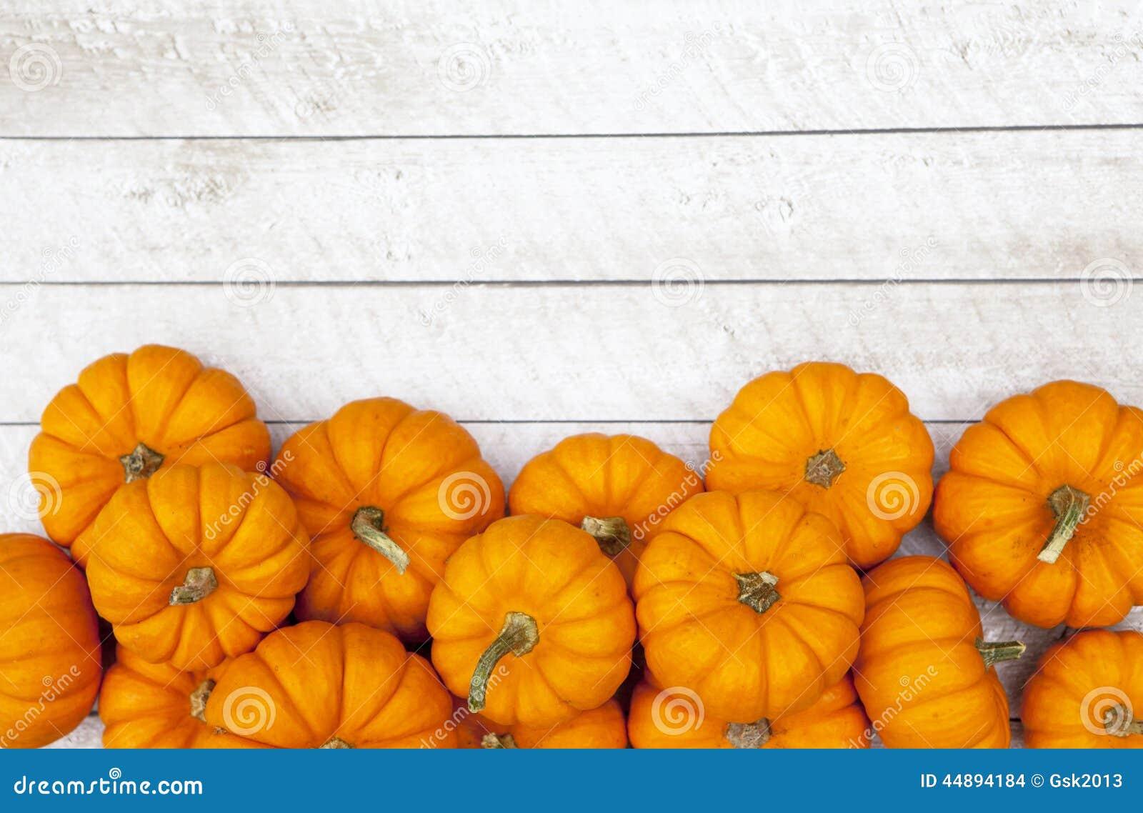 Fondo di ringraziamento della zucca di autunno