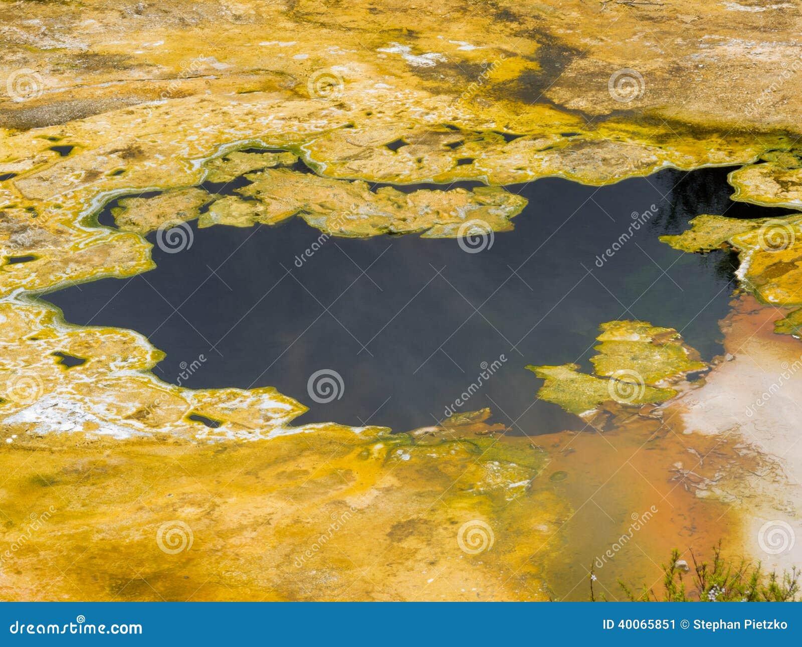 Fondo di superficie della natura di crescita delle alghe dell acqua