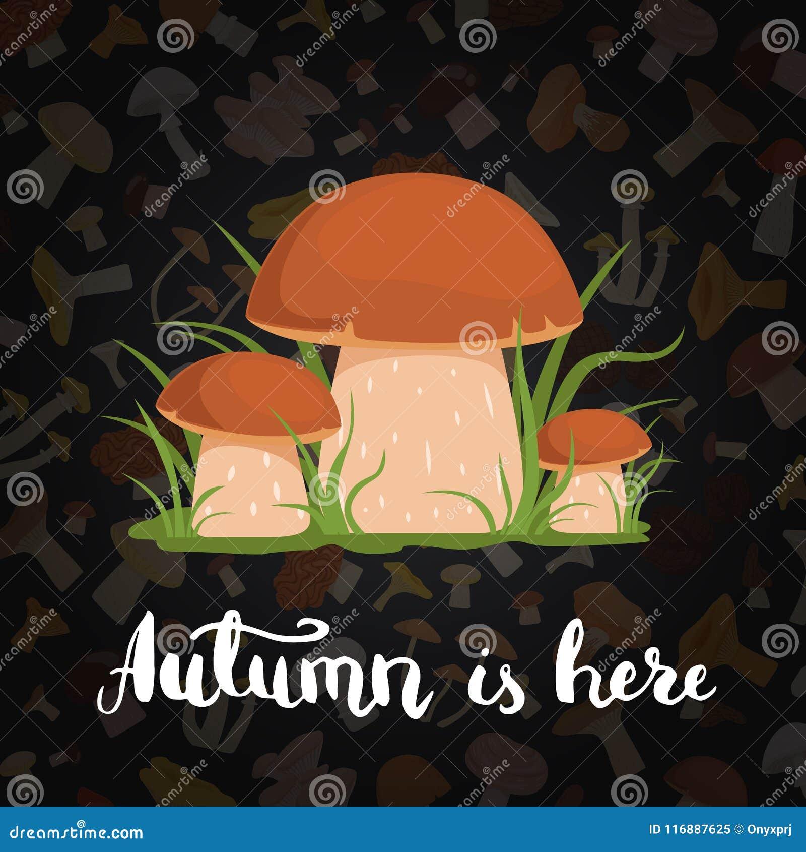 Fondo di vettore con i funghi e l iscrizione del fumetto