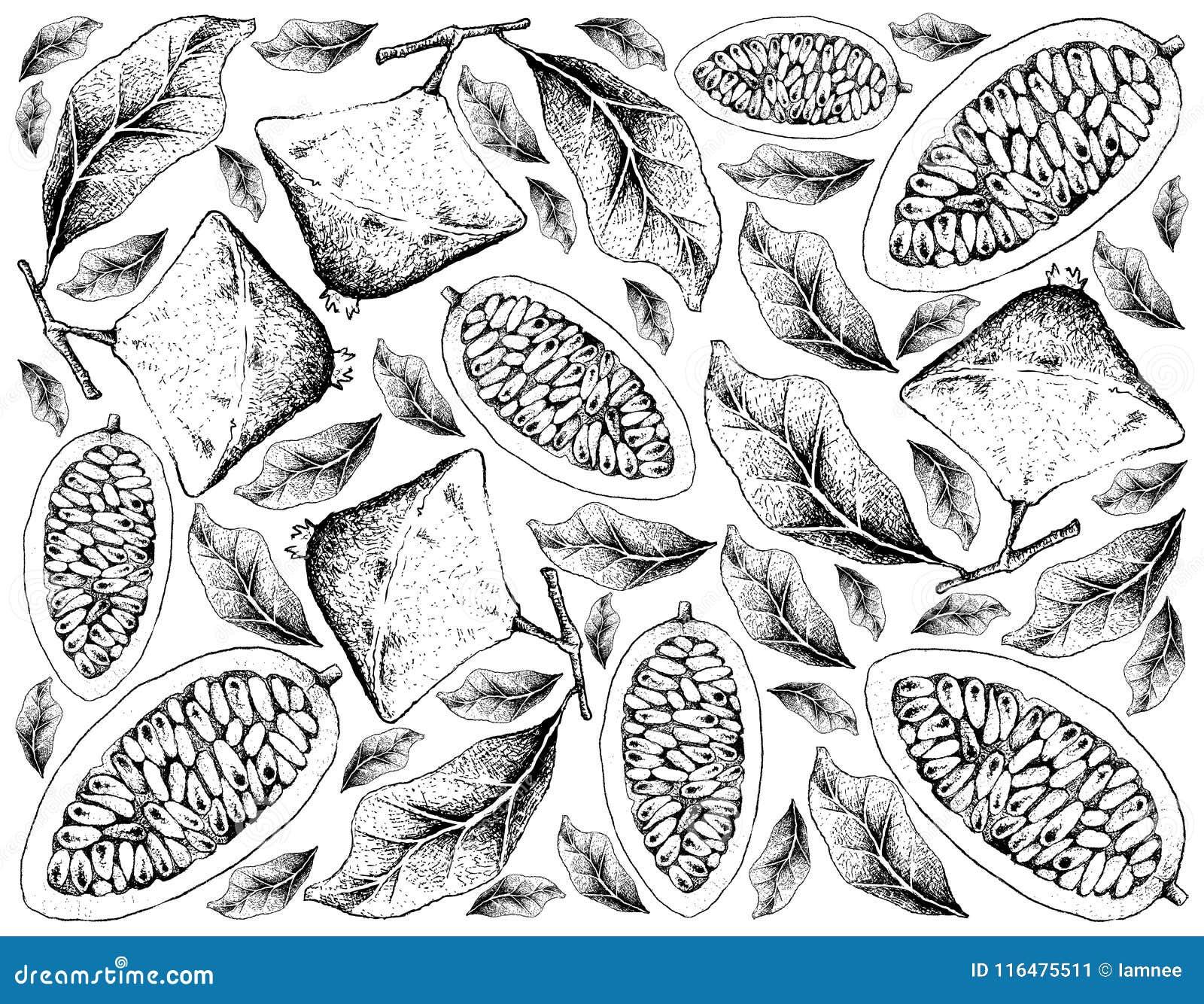 Fondo disegnato a mano di Cambuci e della banana Passionfruit
