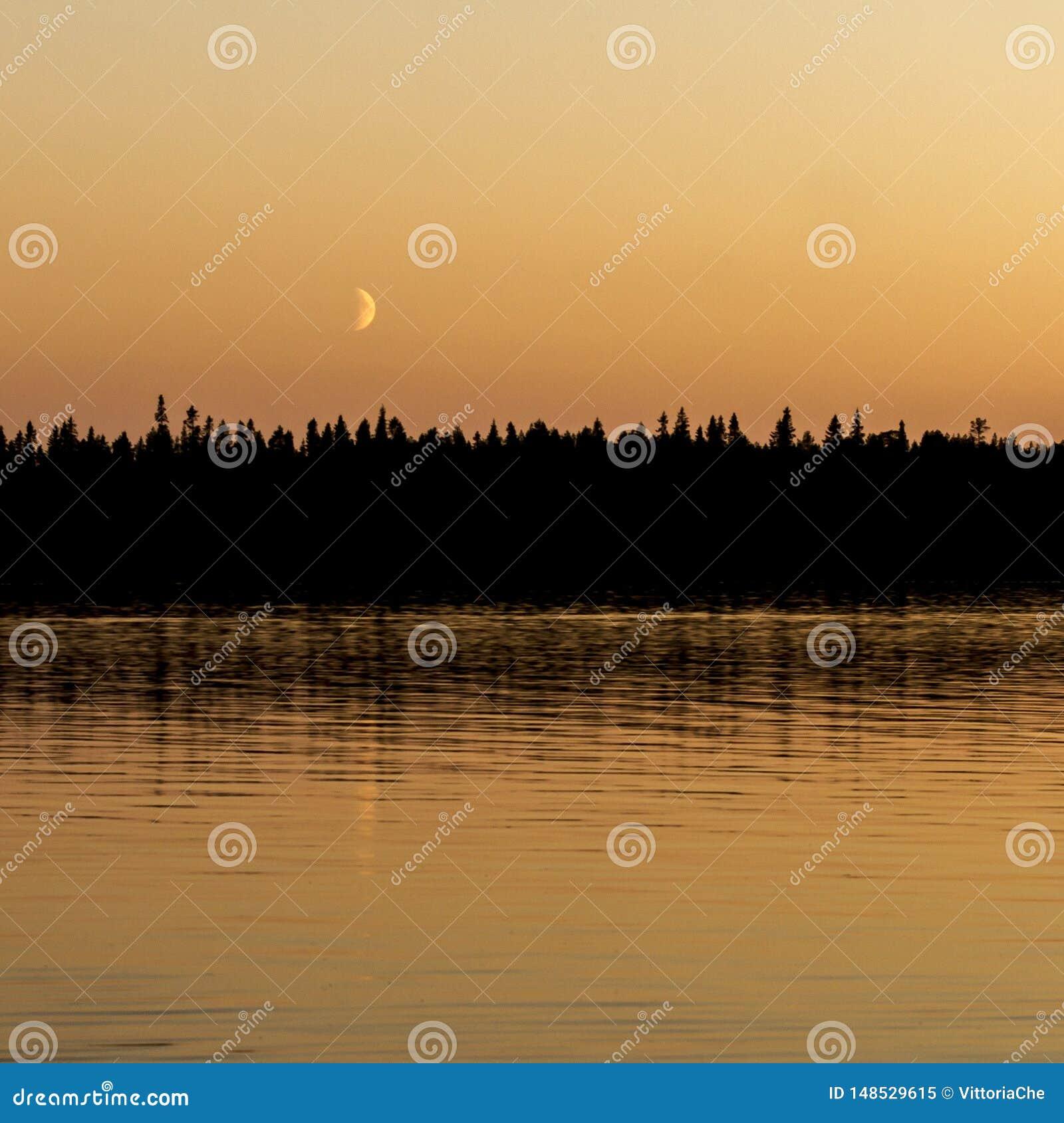 Fondo fabuloso fantástico místico Luna sobre el bosque oscuro de la noche cerca del lago