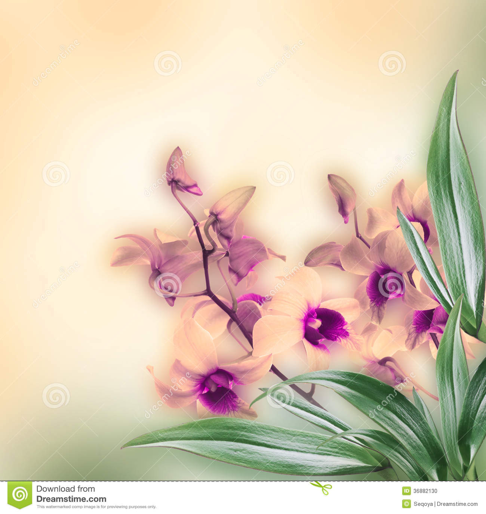 Download Fondo floreale illustrazione di stock. Illustrazione di gambo - 36882130
