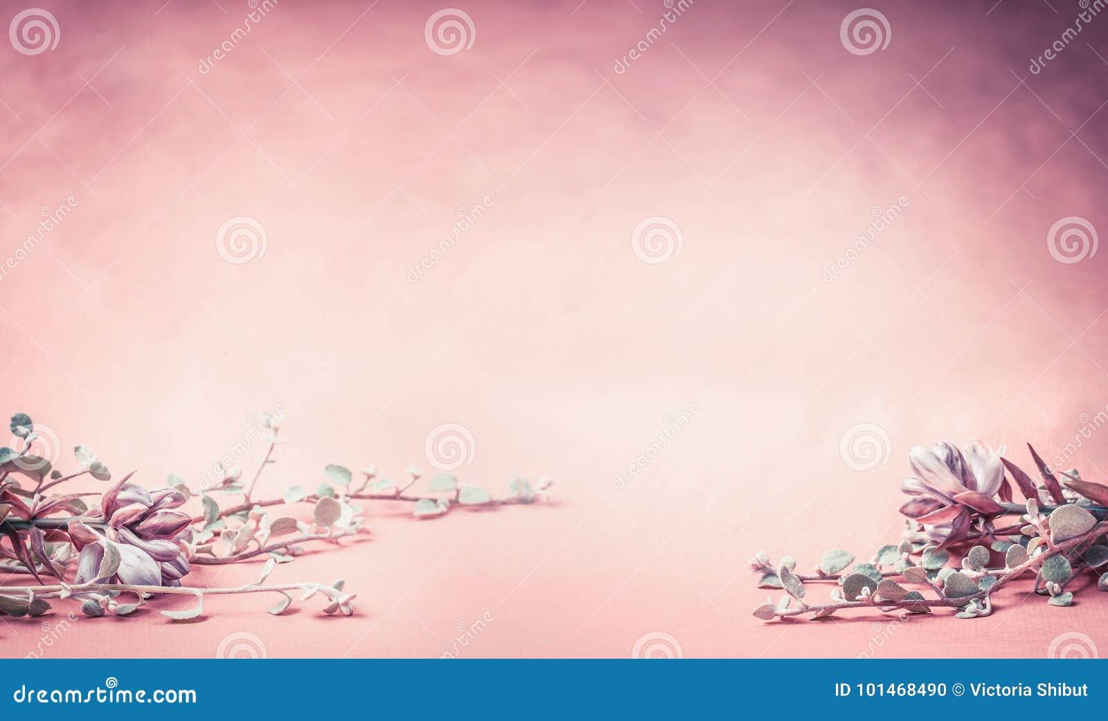 Fondo floreale rosa con i fiori e le foglie, insegna o confine per nozze, la stazione termale o il concetto di bellezza
