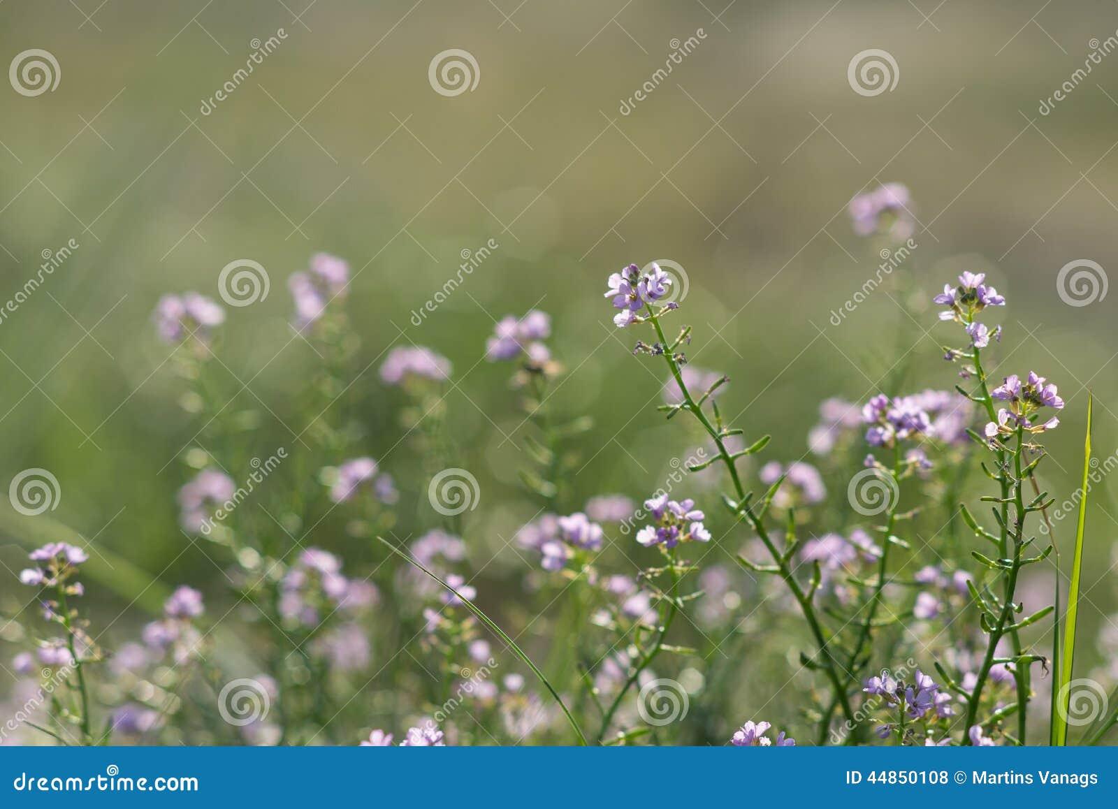 Fondo hermoso de la falta de definición del defocus con las flores blandas