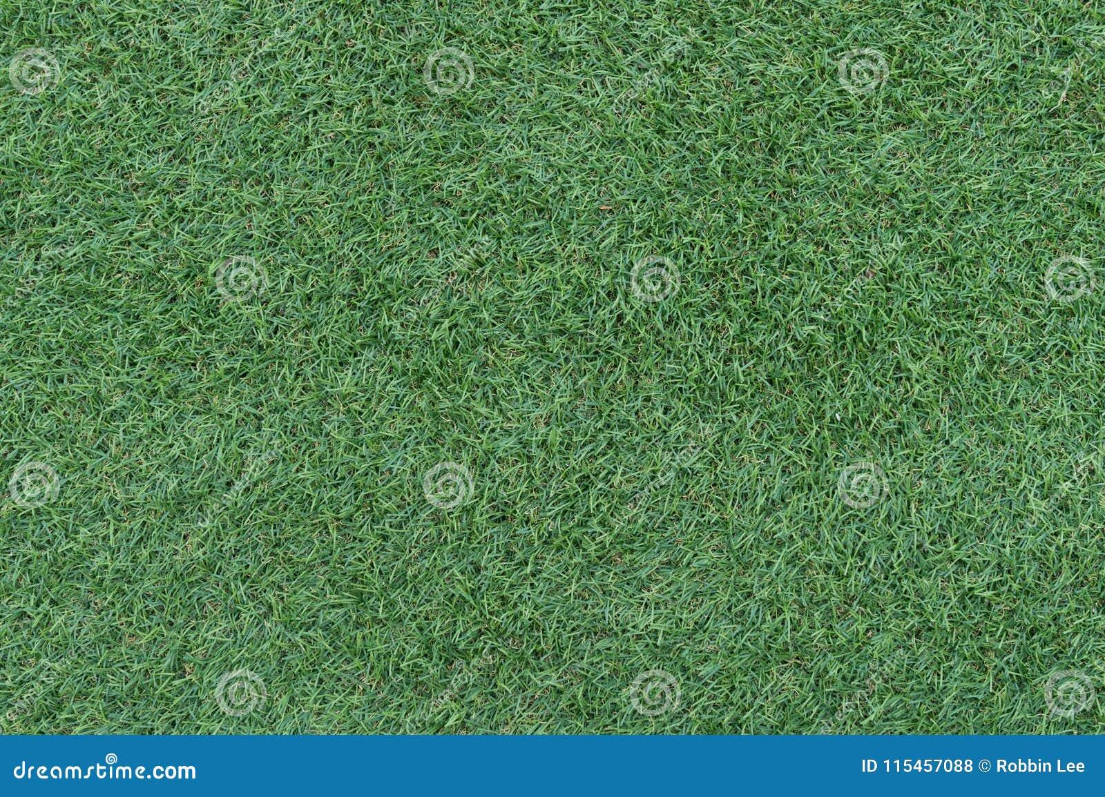 Fondo hermoso de la hierba verde, textura, modelo