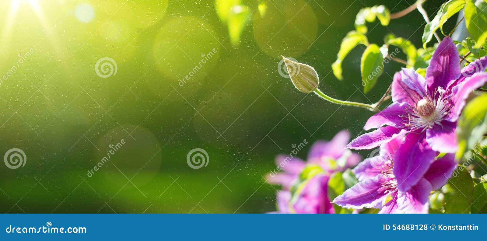 Fondo hermoso del jardín de Art Summer o de la primavera