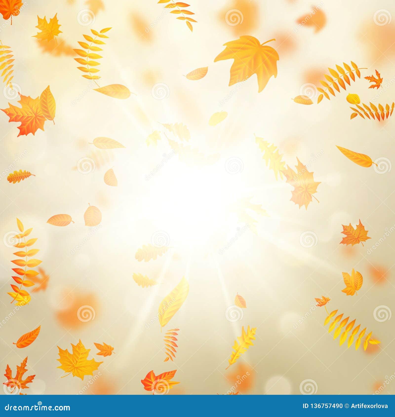 Fondo hermoso del otoño con las hojas de otoño del arce y el sol delicado EPS 10