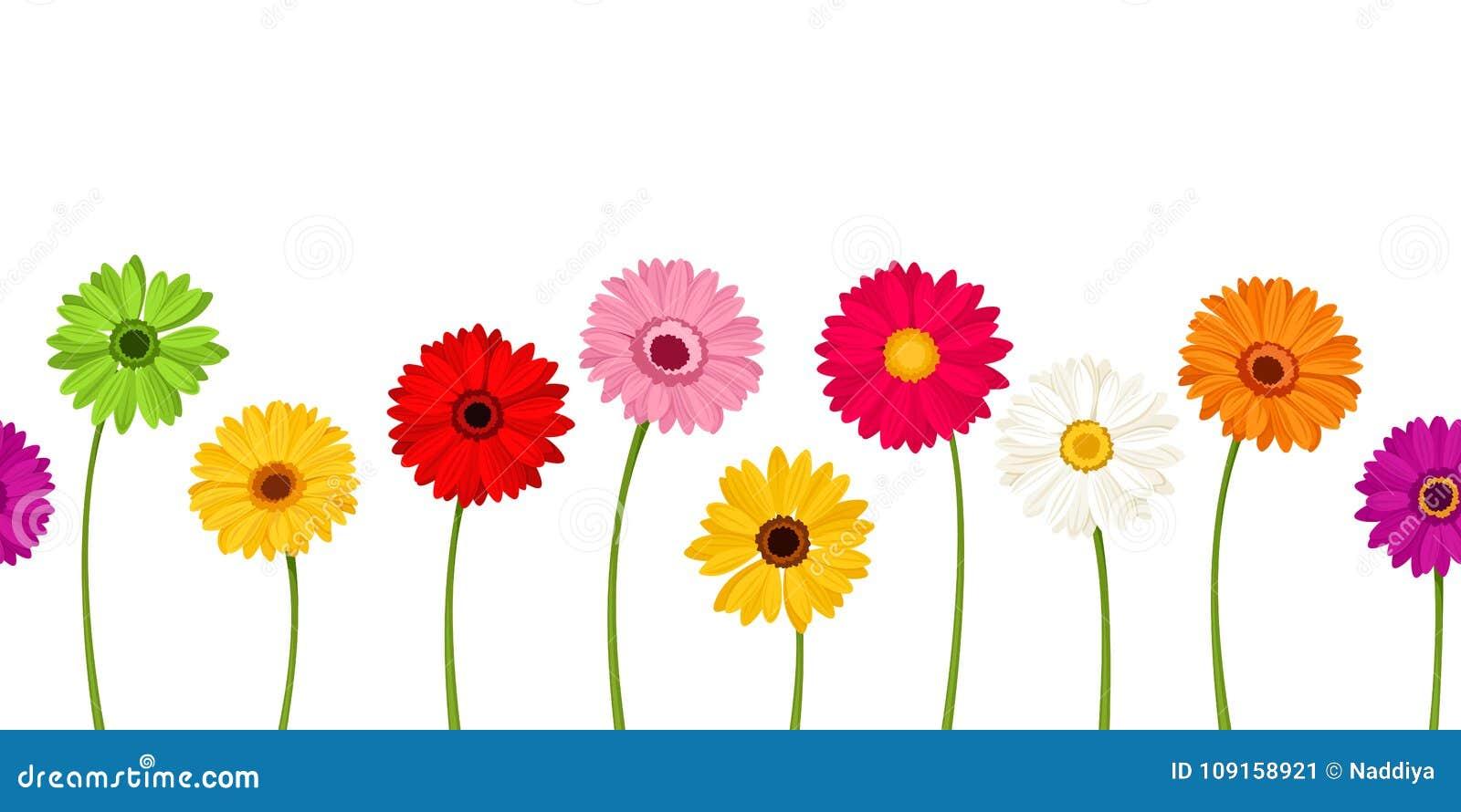 Fondo inconsútil horizontal con las flores coloridas del gerbera Ilustración del vector