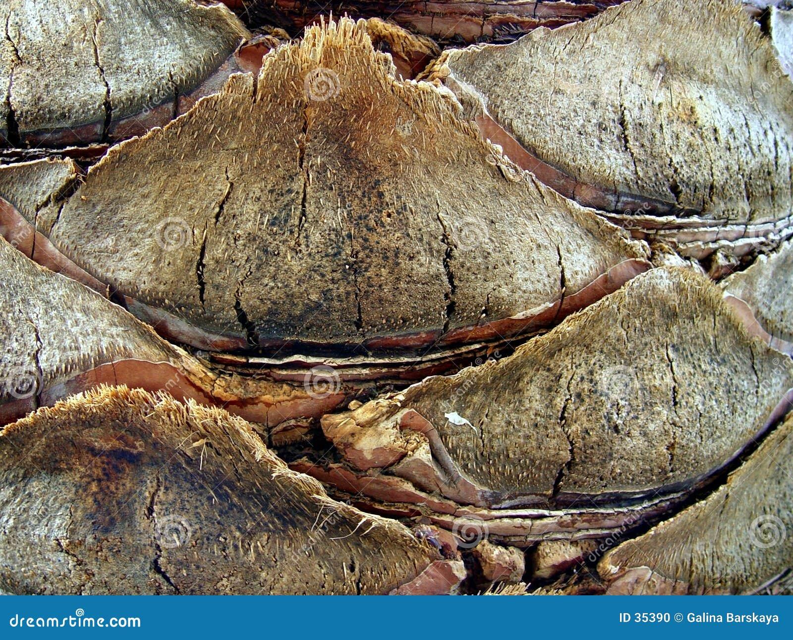 Fondo marrón de la corteza