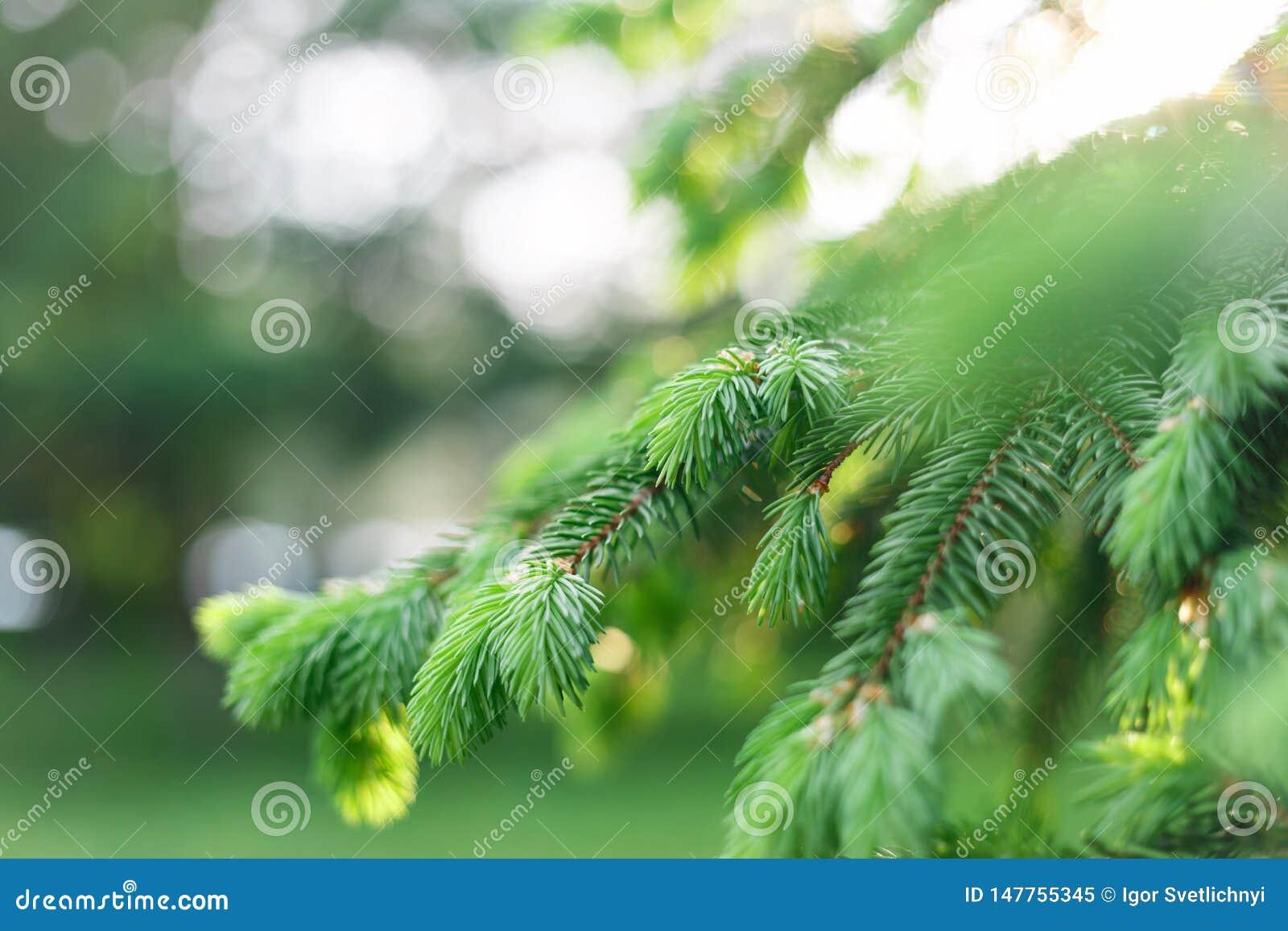 Fondo natural de la primavera hermosa E Foco suave E