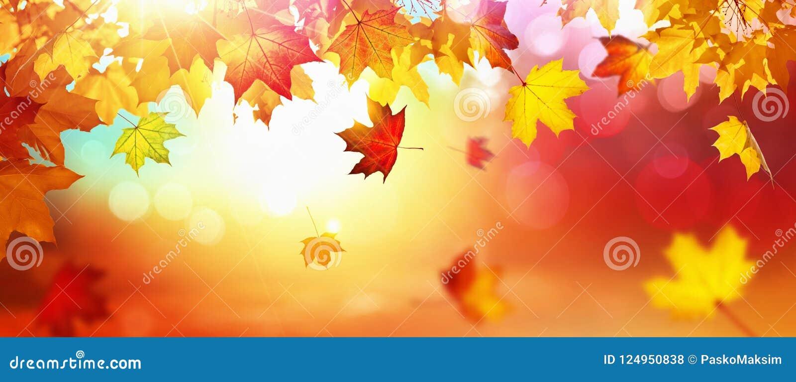 Fondo natural de las hojas de arce del otoño que cae