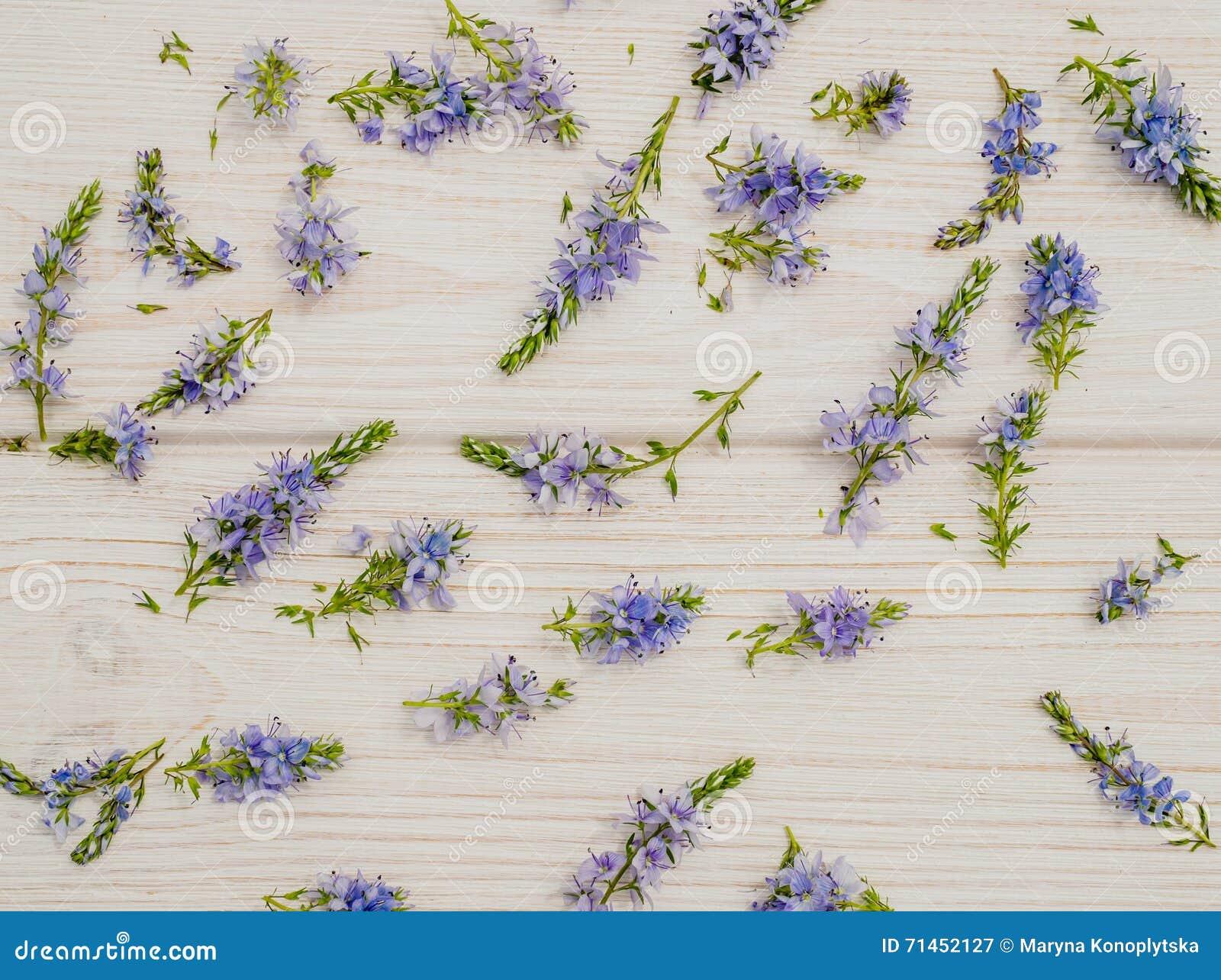 Fondo nello stile della Provenza Fiordalisi blu delicati e legno bianco