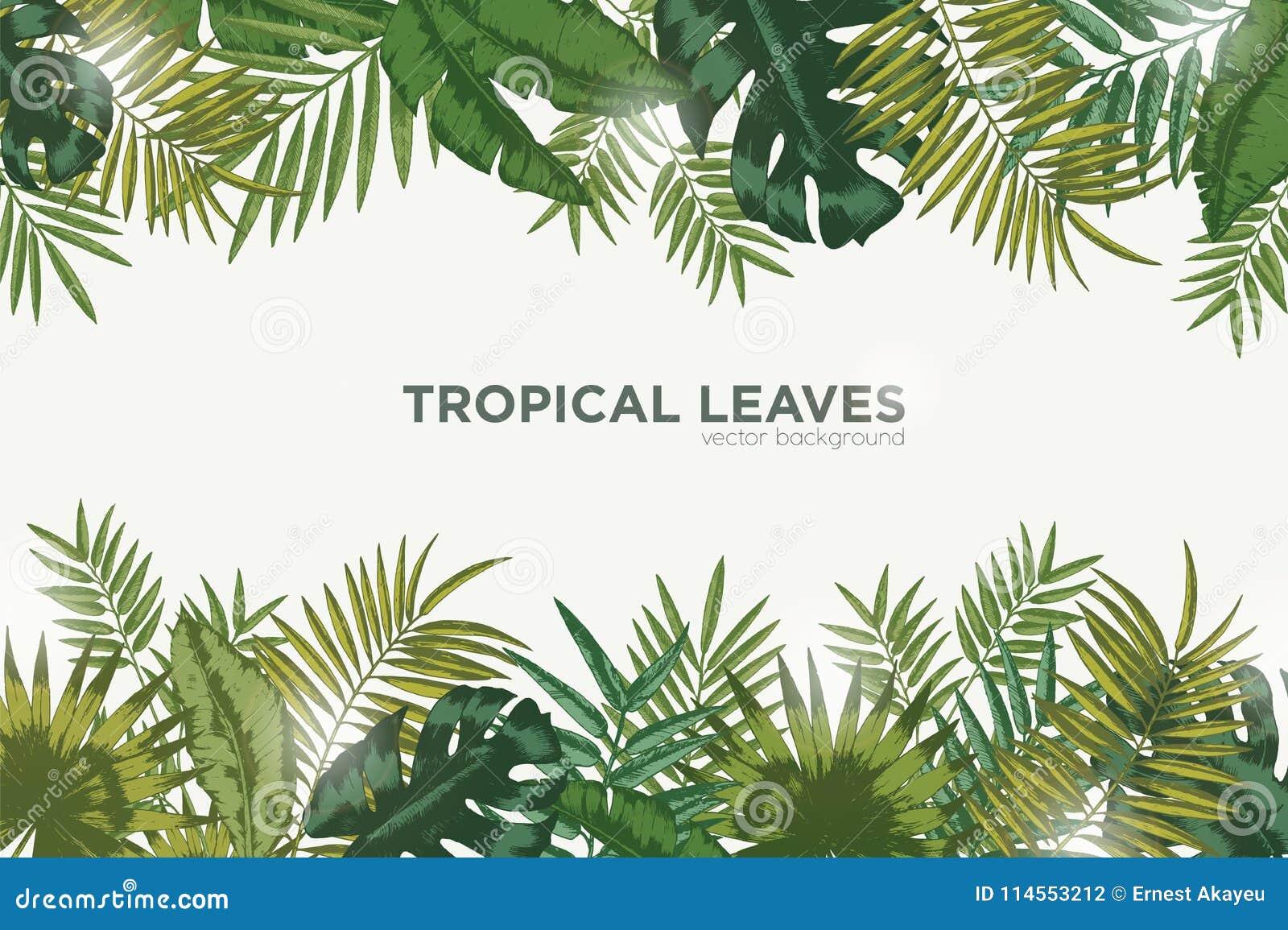 Fondo orizzontale con le foglie verdi della palma, della banana e del monstera tropicali Contesto elegante decorato con