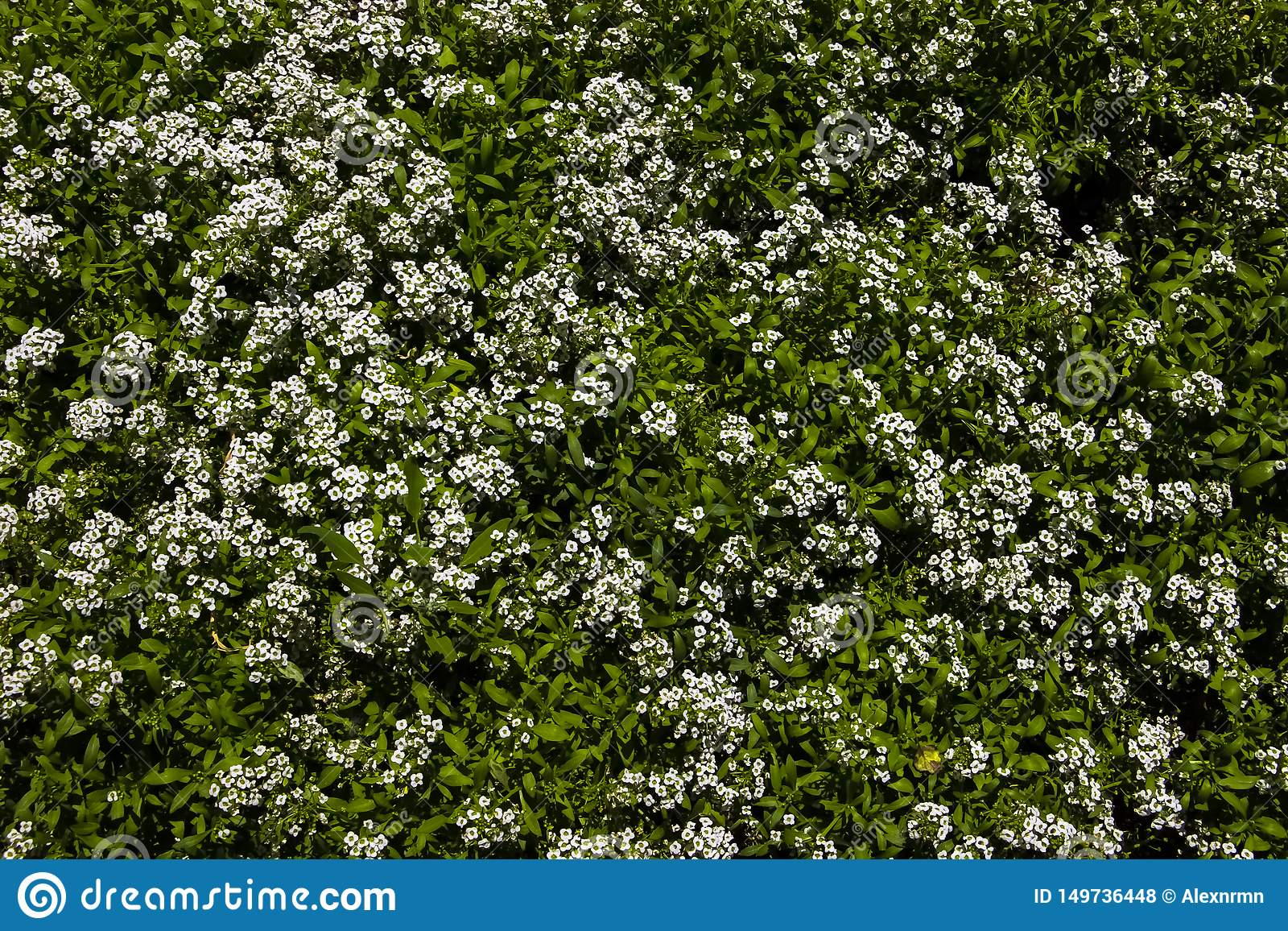 Fondo, radura di struttura dei wildflowers