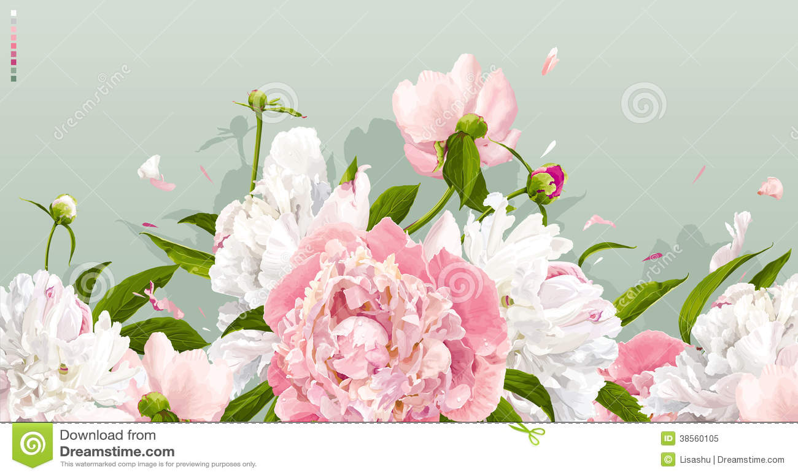 Fondo rosa e bianco della peonia