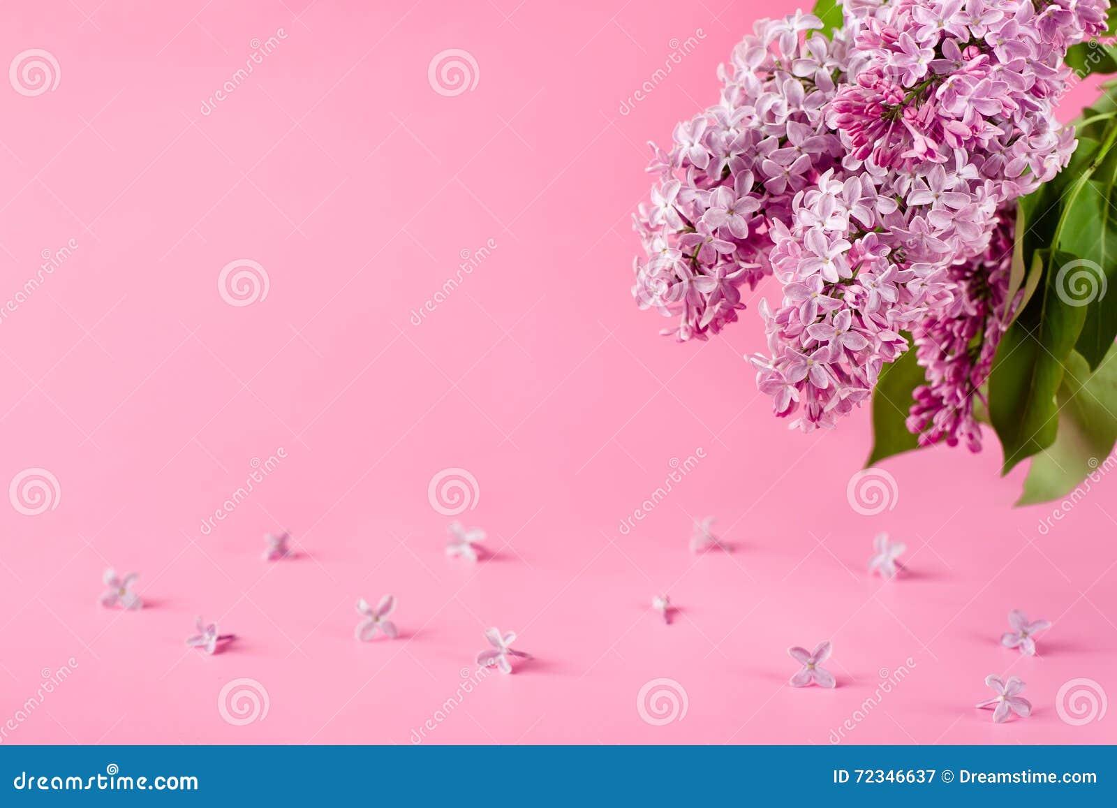 Felicitaciones De Cumpleaños Con Flores: Fondo Rosado Con Las Flores De La Lila Tarjeta De