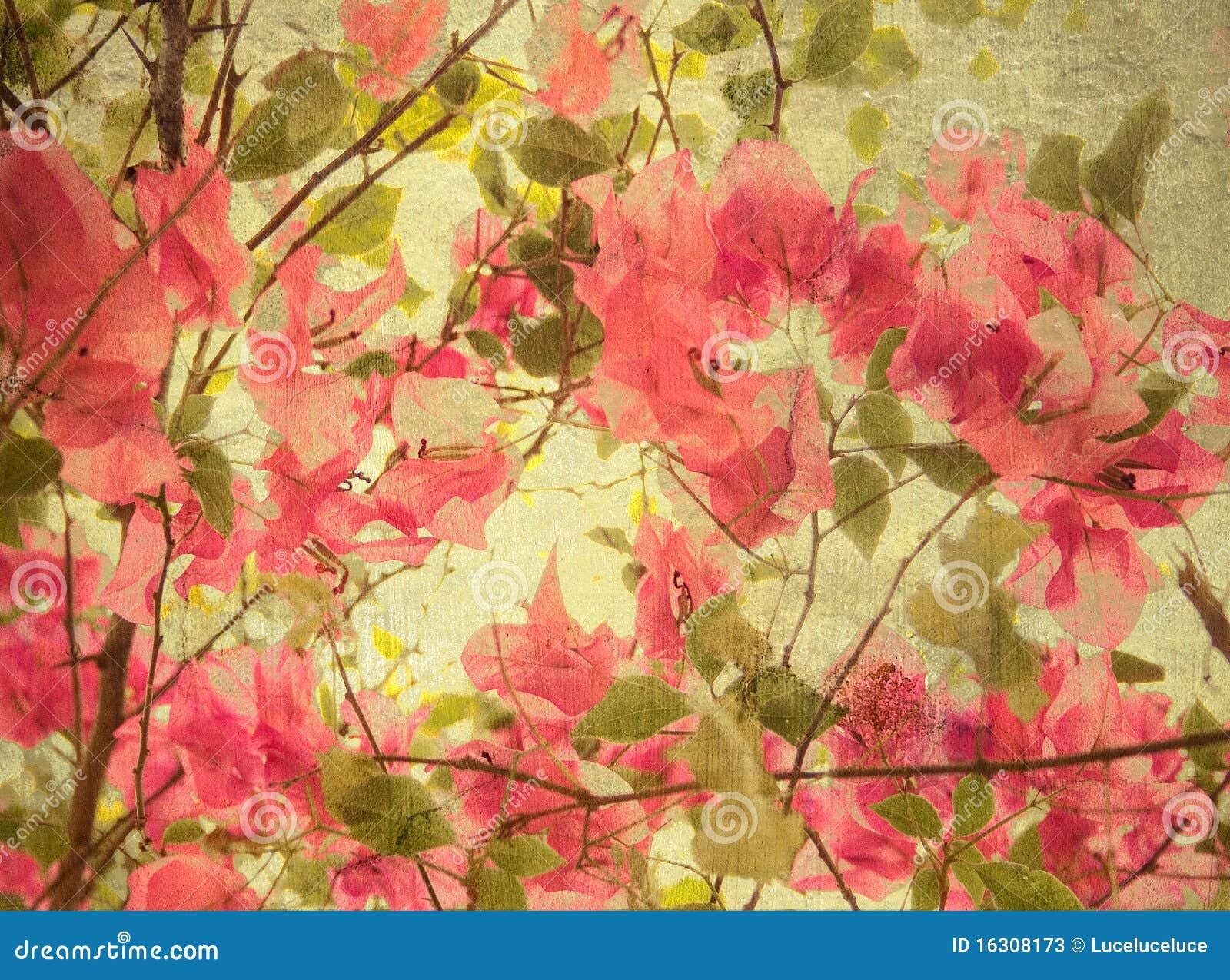 Fondo rosado del arte del bougainvillea