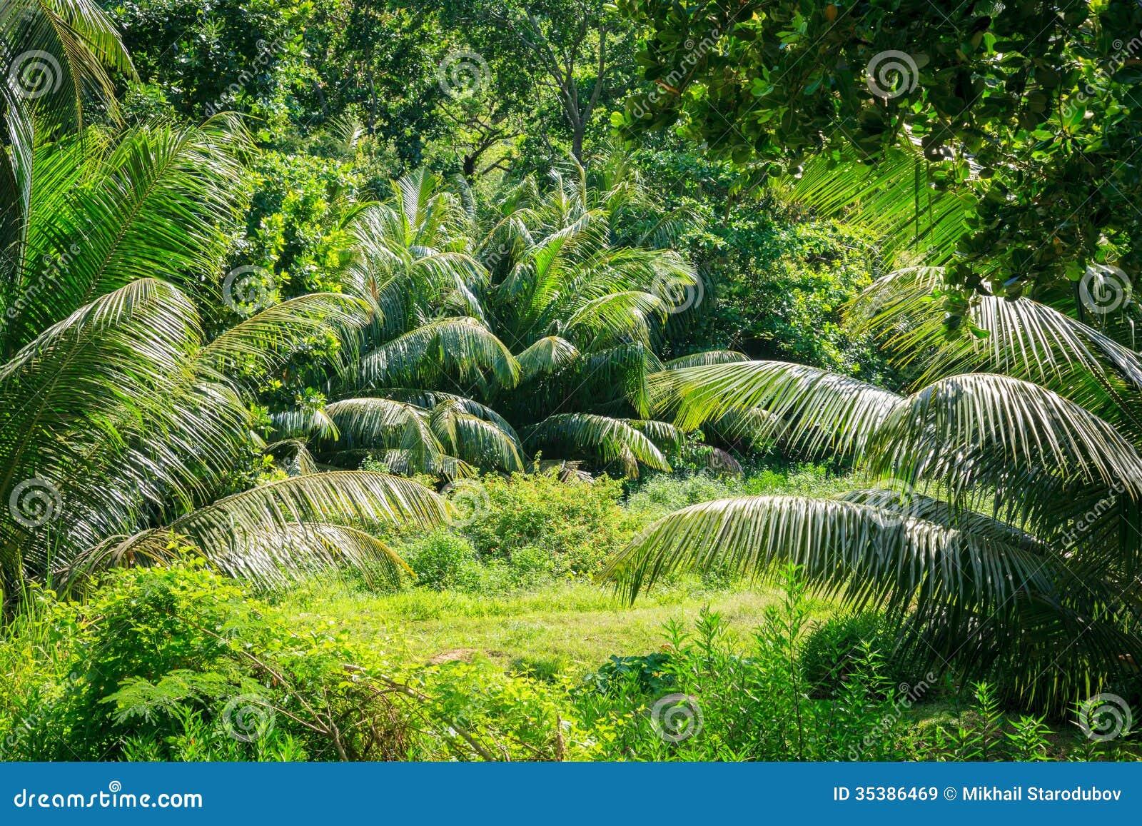 Fondo scenico della foresta della giungla.