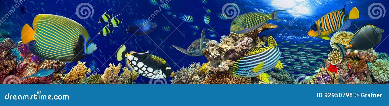 Fondo subacqueo di panorama del paesaggio della barriera corallina