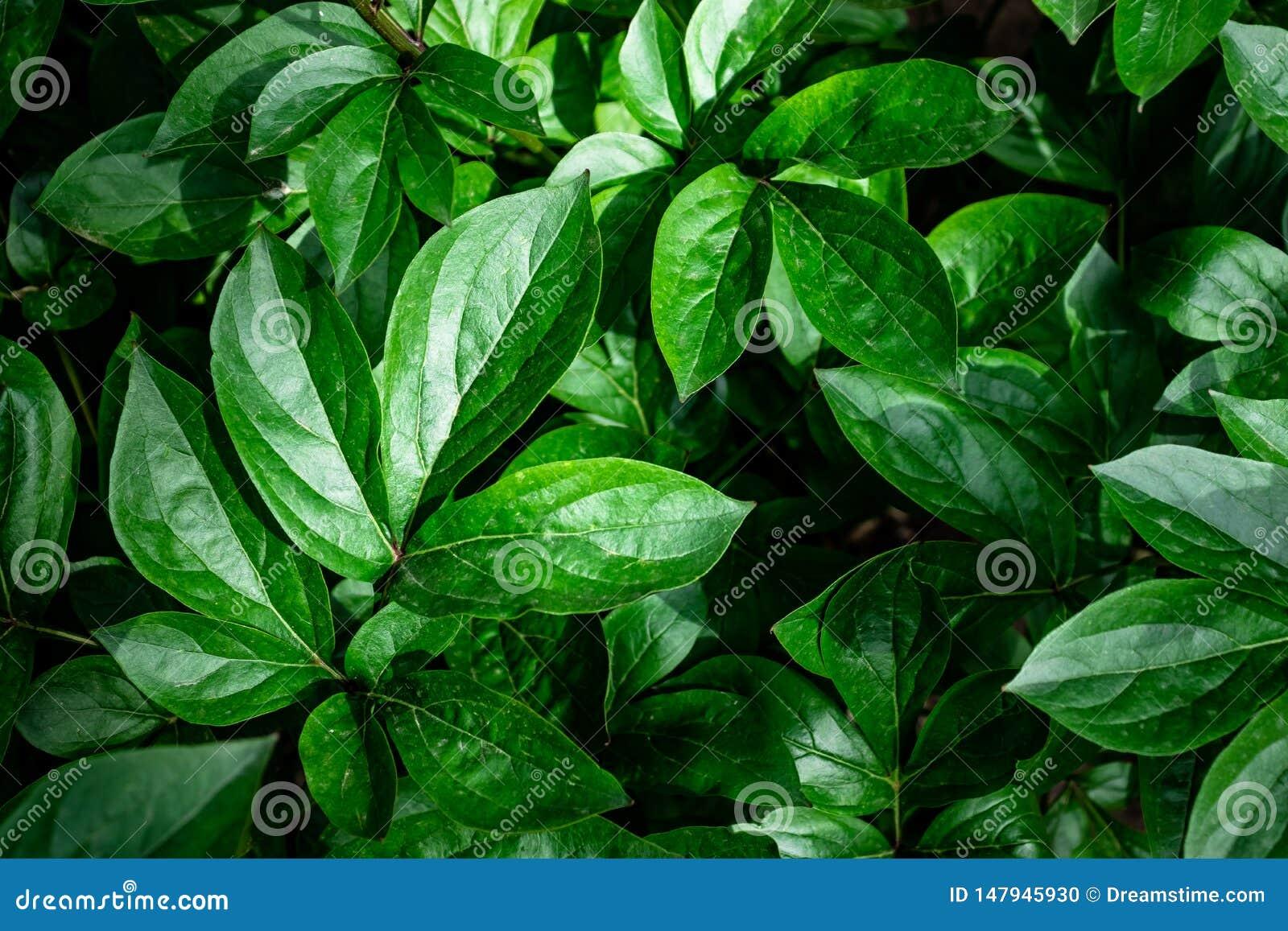 Fondo sulle foglie verdi