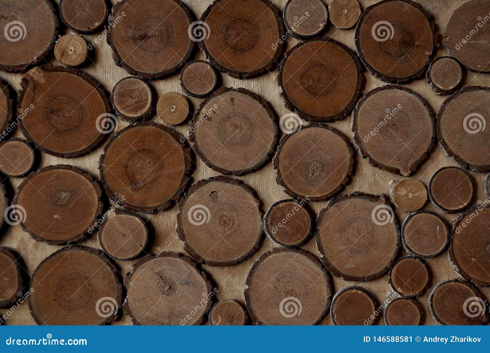 Fondo - textura de los anillos de árbol cortados