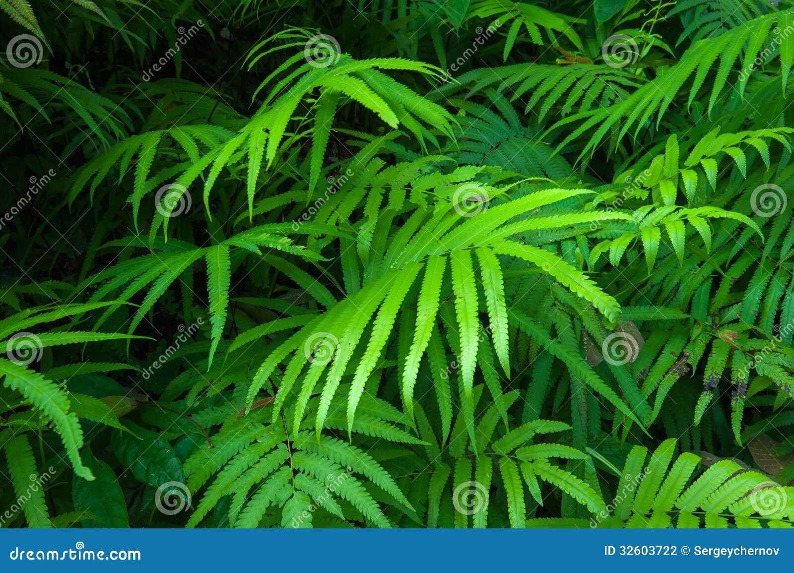 Fondo tropicale del fogliame verde delle foglie delle for Pianta della foresta di pioppo