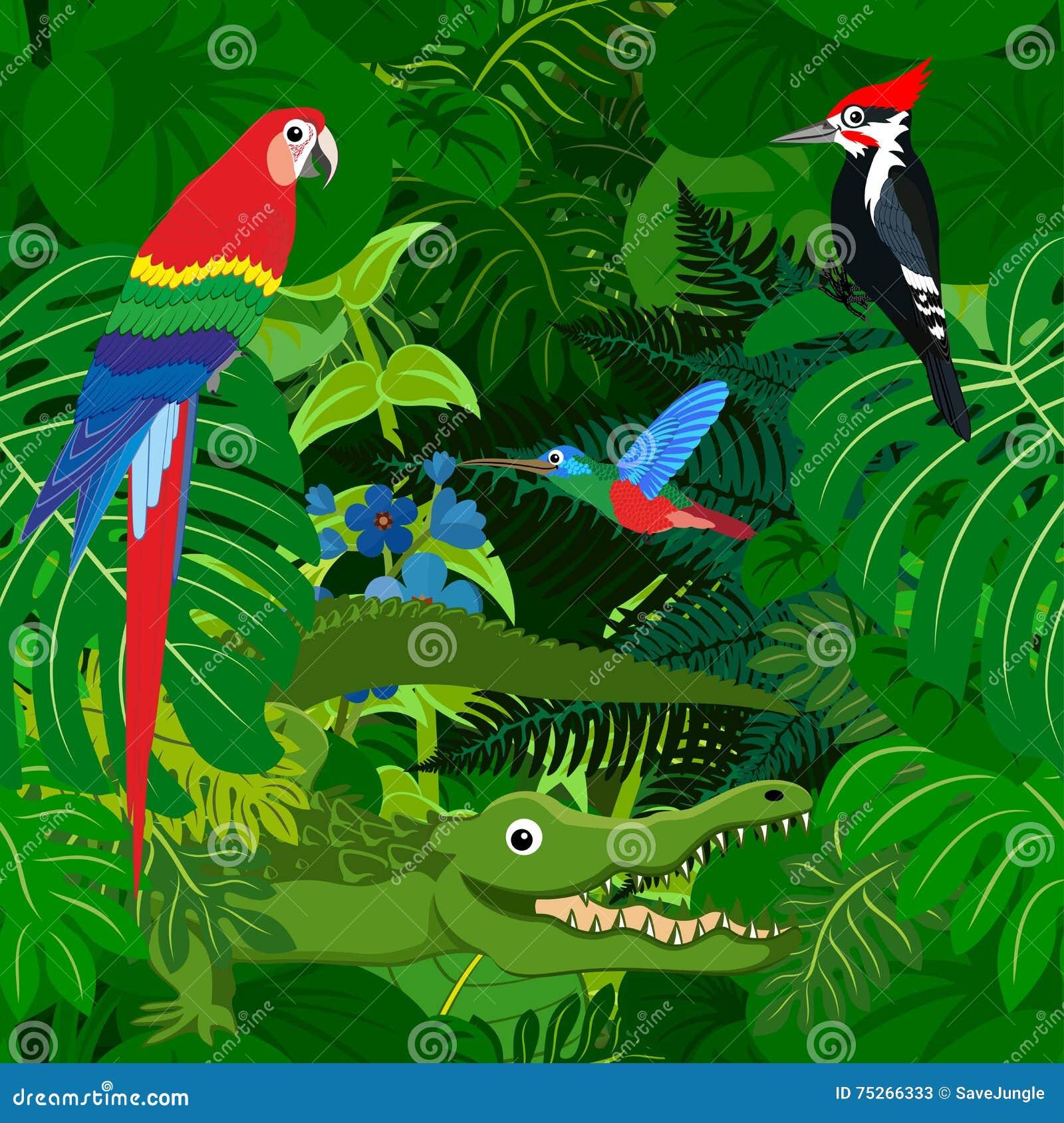 Fondo tropicale della giungla della foresta pluviale di - Gli animali della foresta pluviale di daintree ...