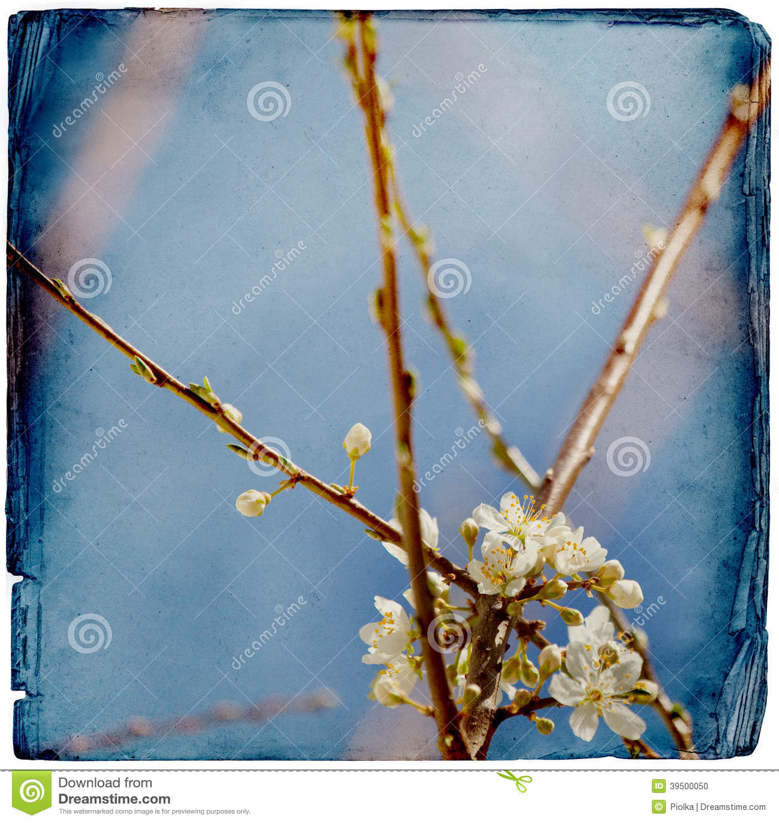 Fondo vago di springflowers