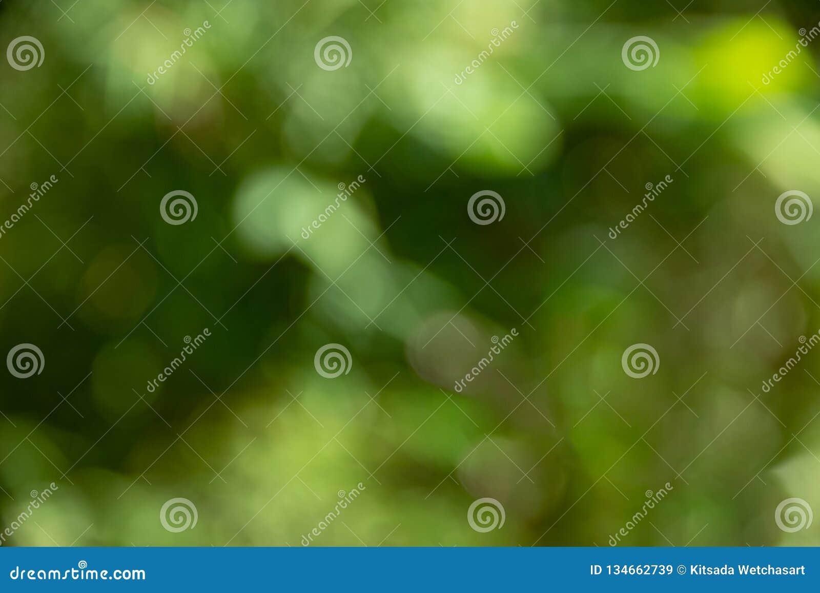 Fondo verde abstracto Defocused del bokeh, fondo suave