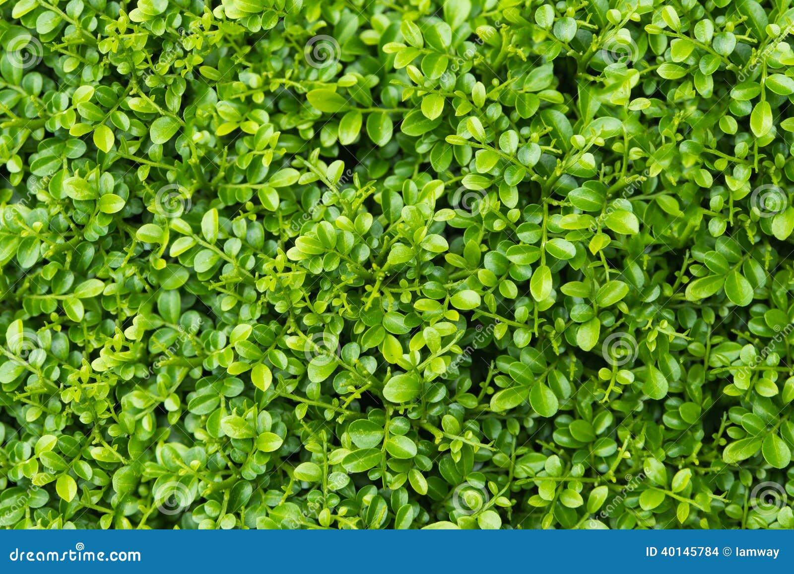 Fondo Verde De La Planta De La Hoja Foto De Archivo