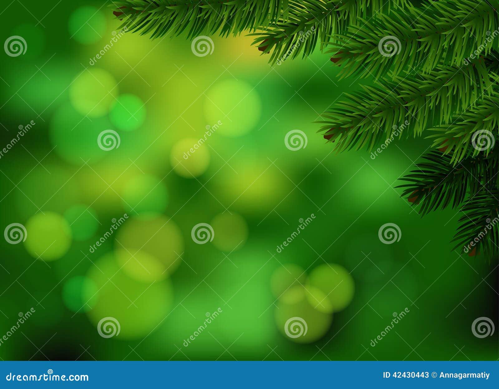 Fondo verde de la rama del abeto