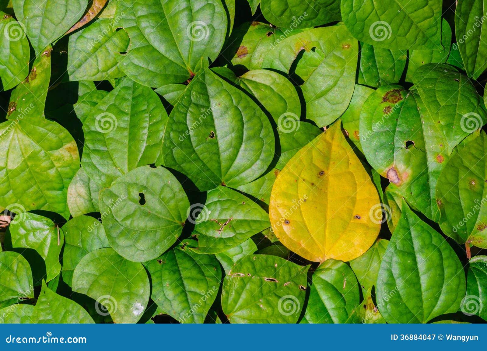 Download Fondo verde della foglia immagine stock. Immagine di legno - 36884047