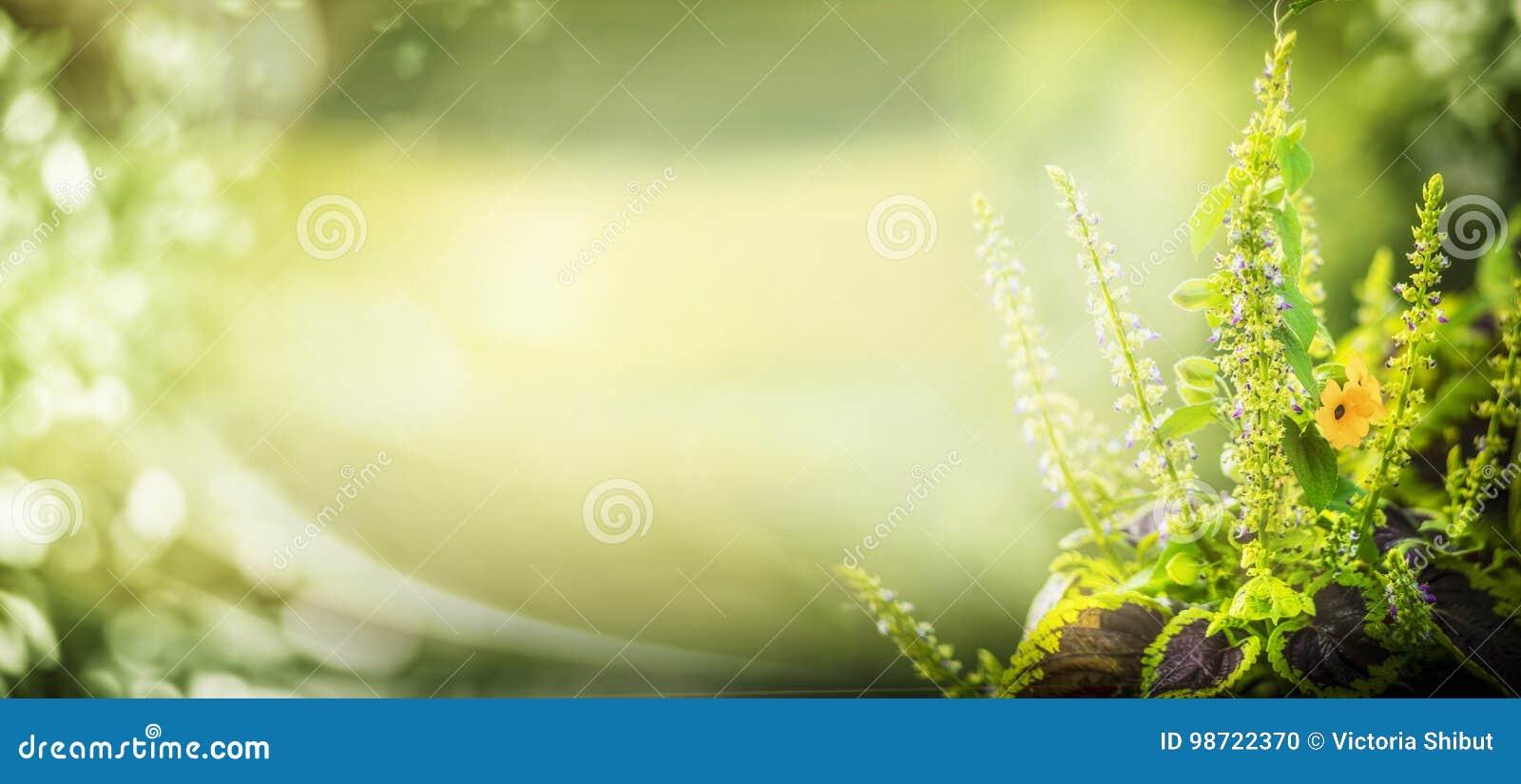 Fondo verde della natura con illuminazione della pianta e del bokeh di giardino, confine floreale