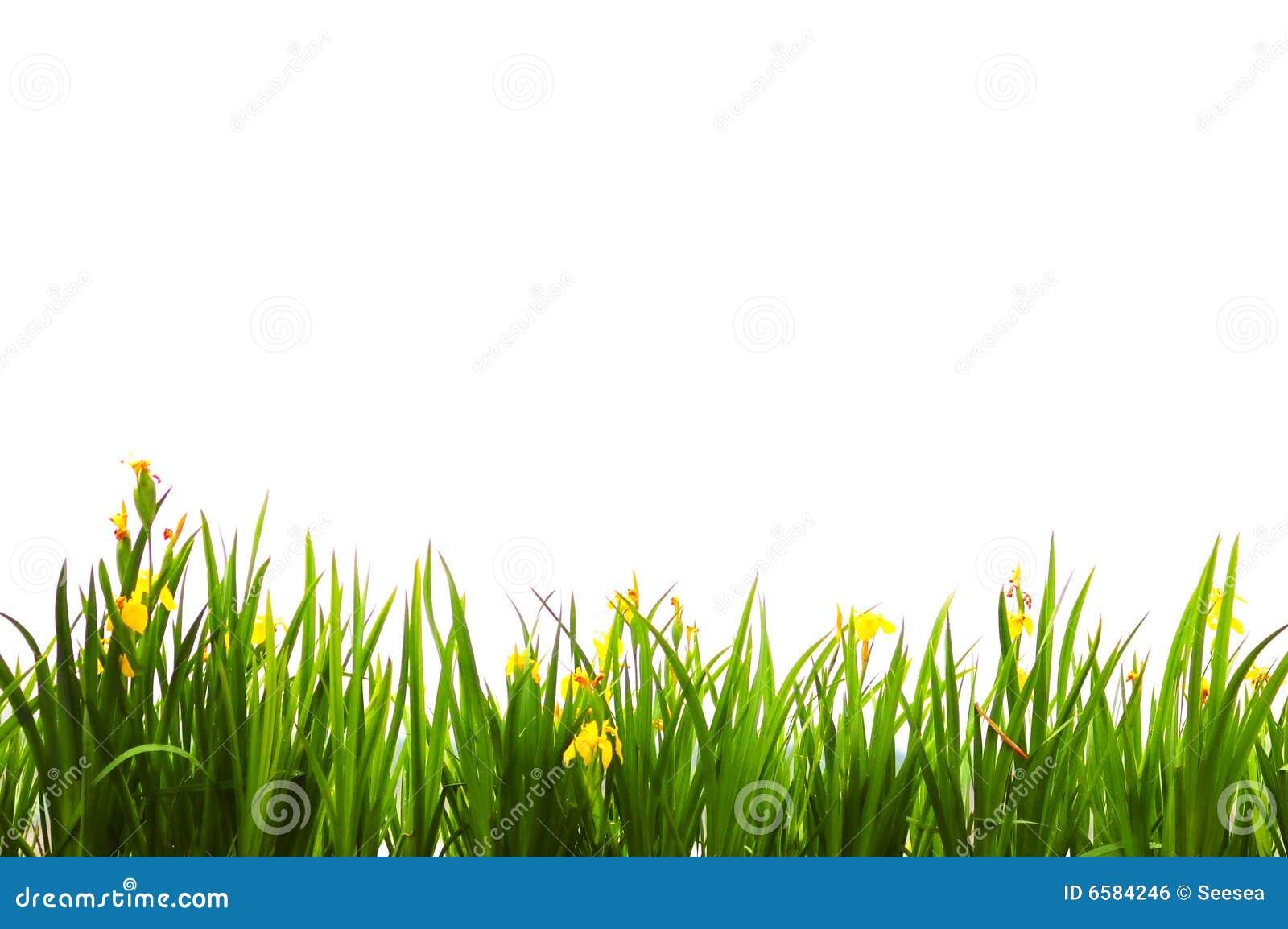 Fondo de la hierba verde Descargar Vectores gratis