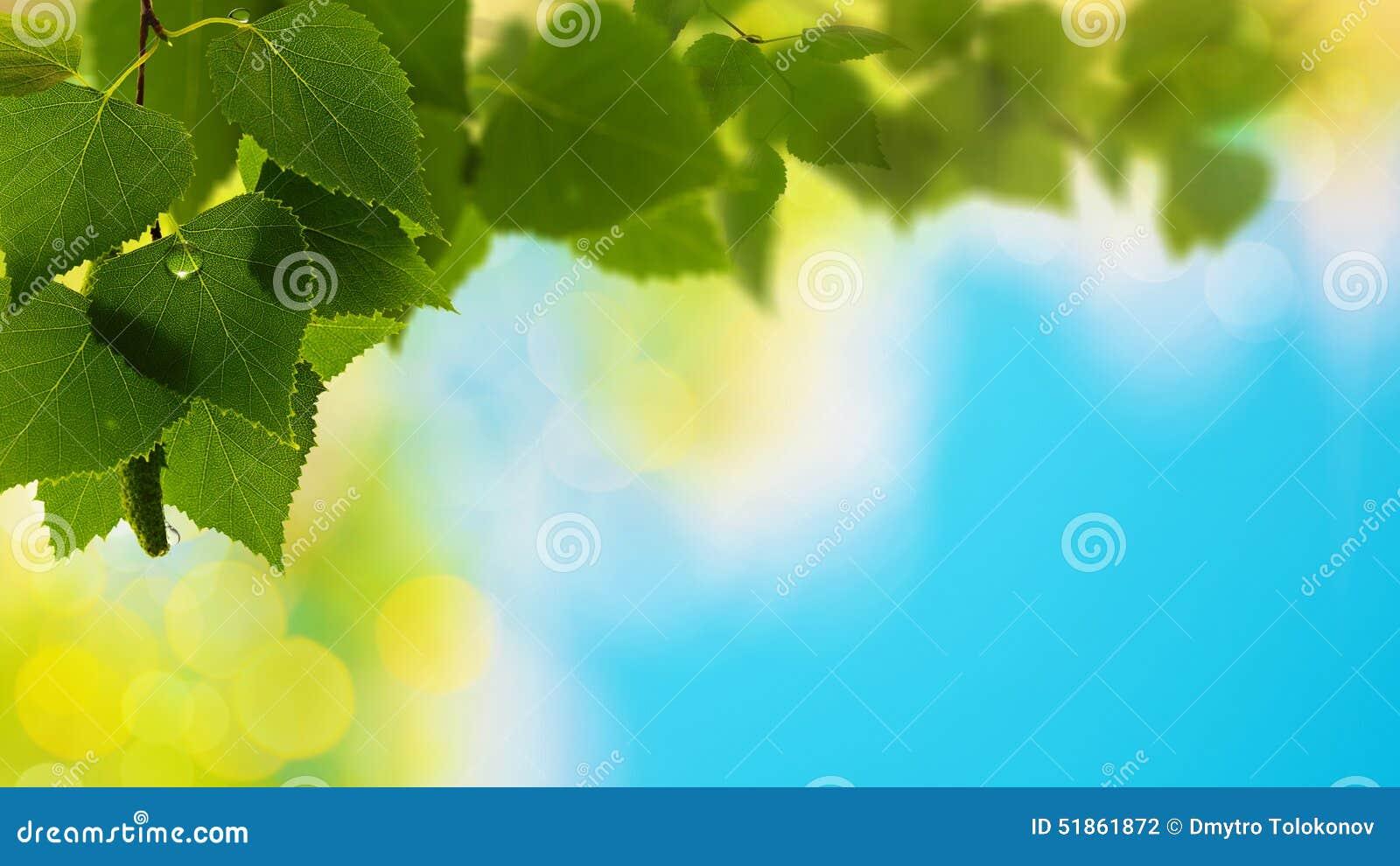 Fondos naturales abstractos del verano