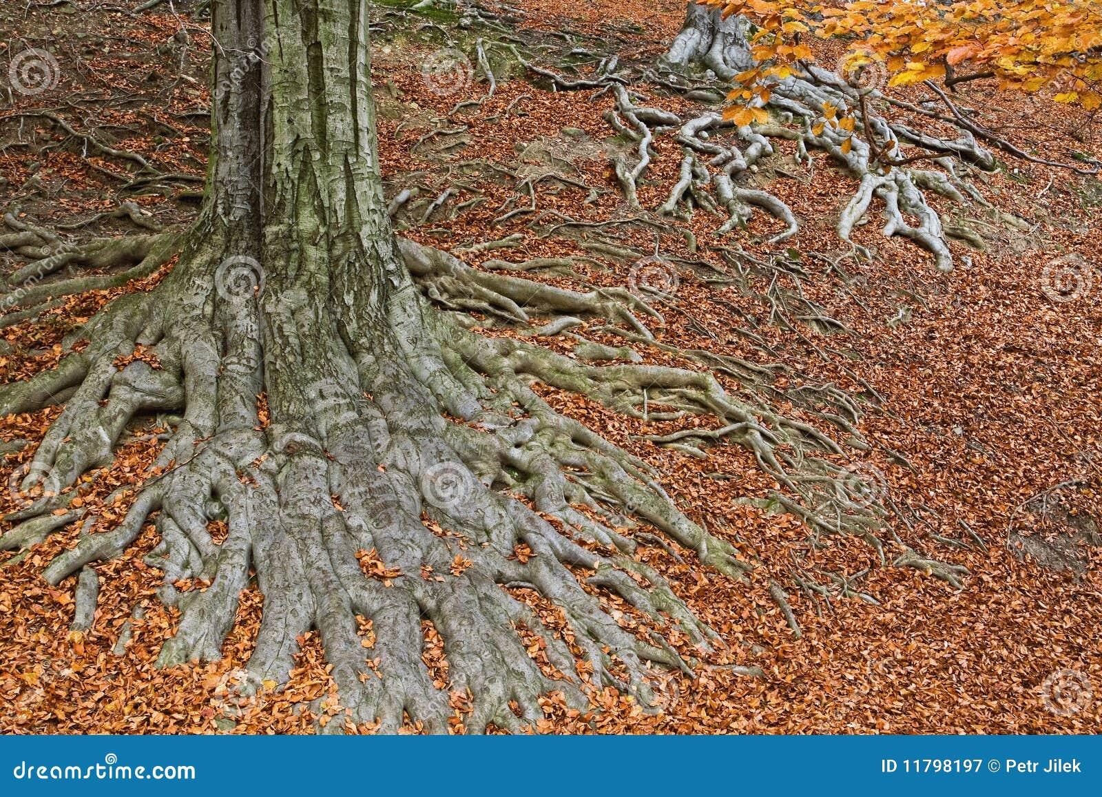 fonds d 39 un arbre dans des couleurs d 39 automne image stock image du accroissement stationnement. Black Bedroom Furniture Sets. Home Design Ideas