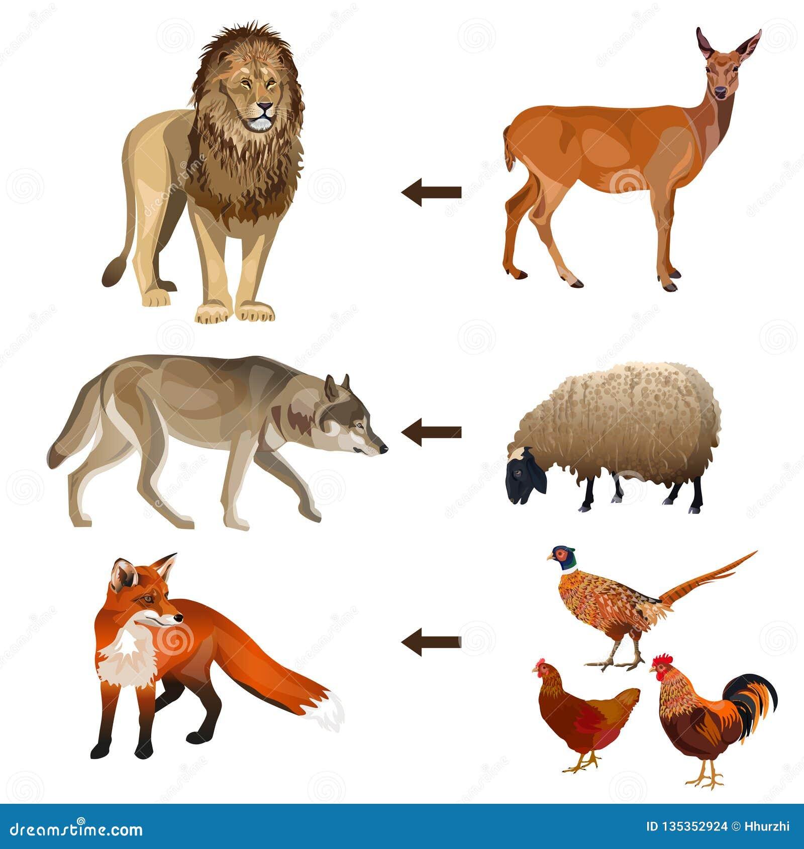 Food chain animals