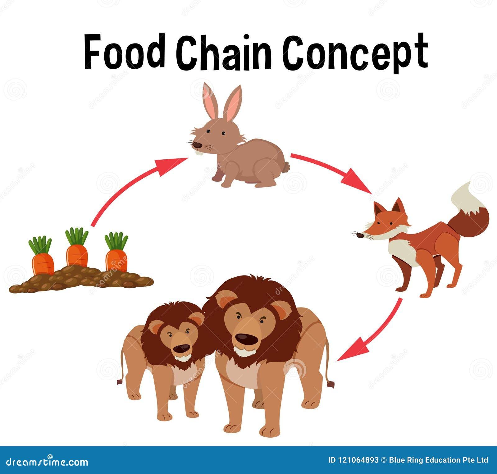 Food chain concept diagram