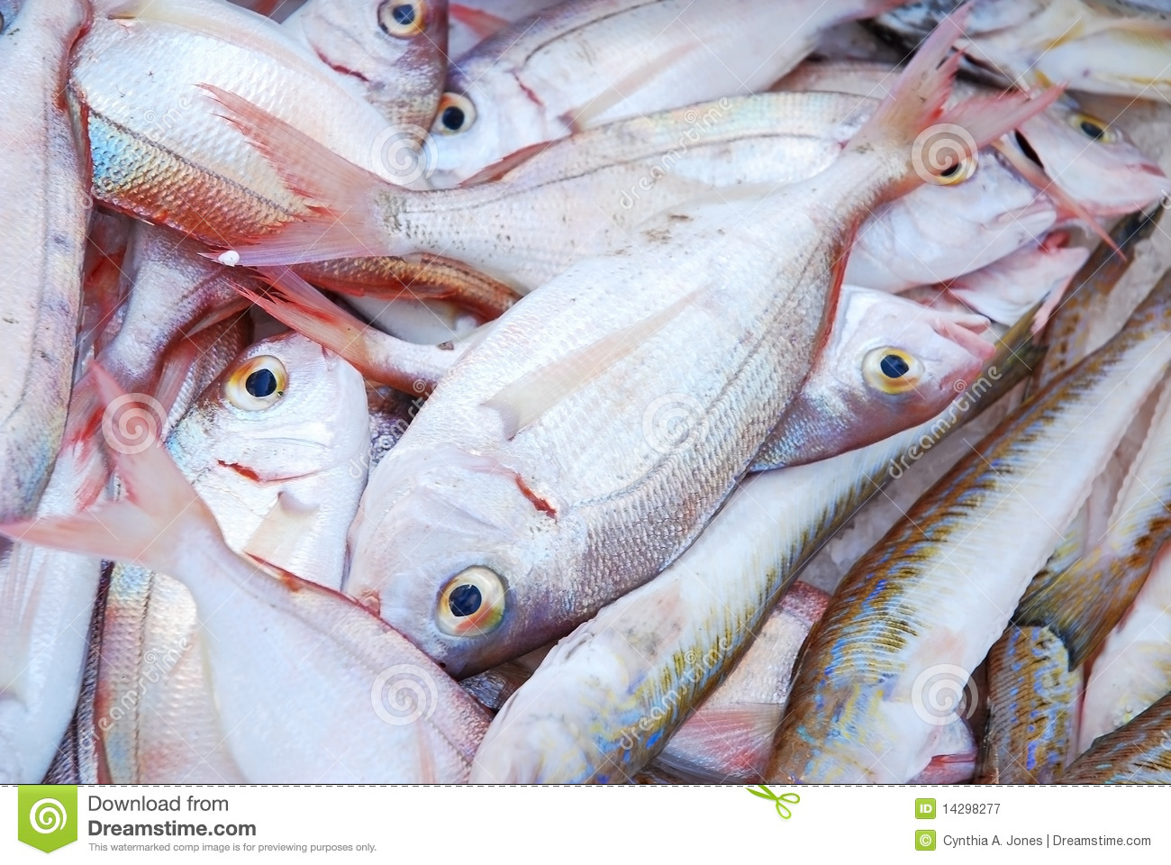 Food fish stock image image of silver delicious fresh for What is fish food made of